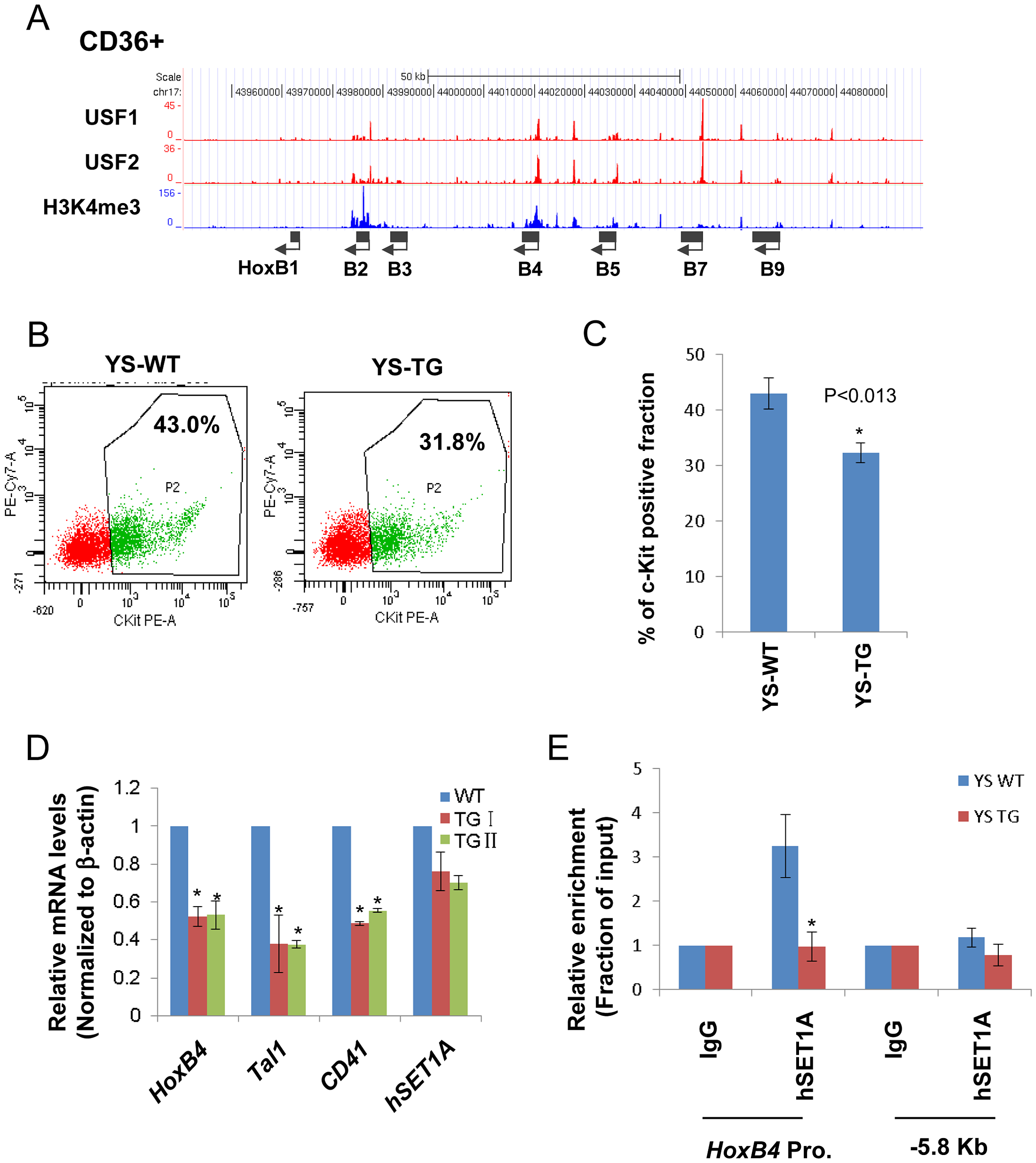 USF1 is responsible for the recruitment of the hSET1A complex and transcriptional activation of <i>HoxB4</i> during hematopoiesis.