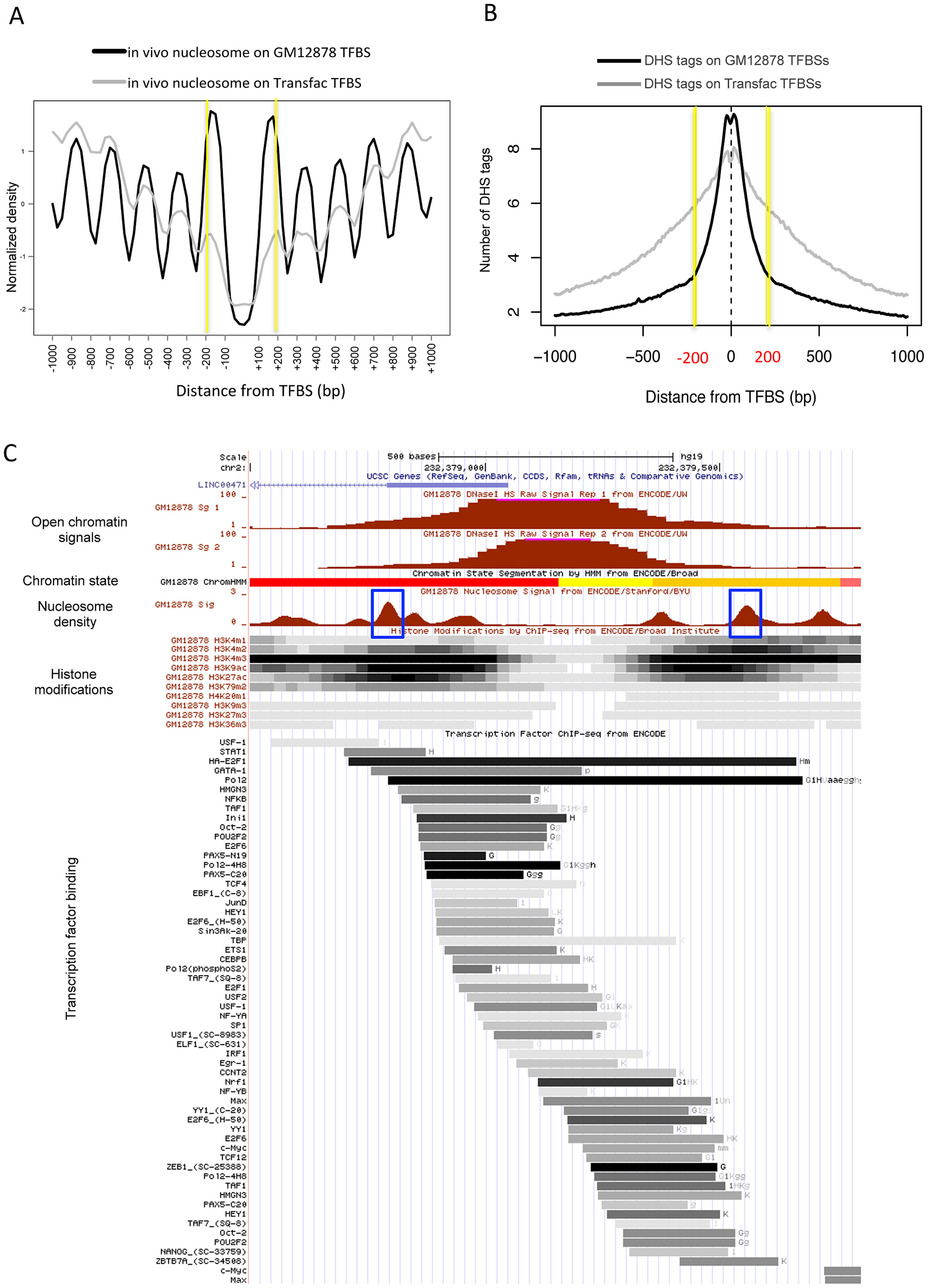 Boundary nucleosome positioning within open chromatin.