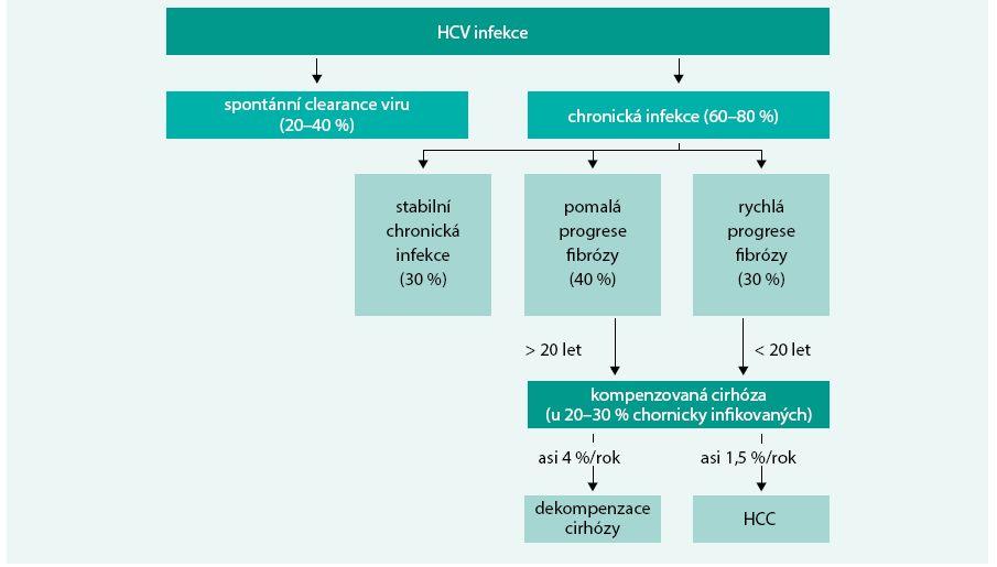 Schéma. Průběh onemocnění chronickou hepatitidou C
