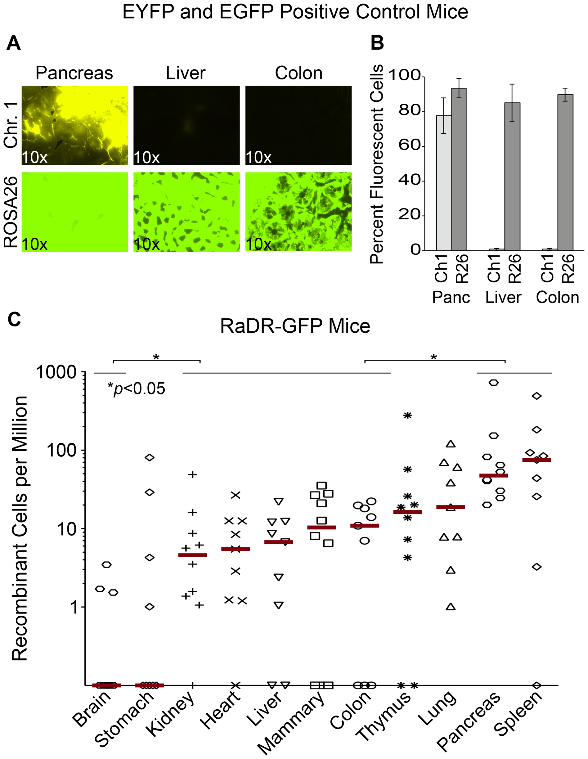 Analysis of EYFP and EGFP positive control mice and RaDR-GFP tissues.