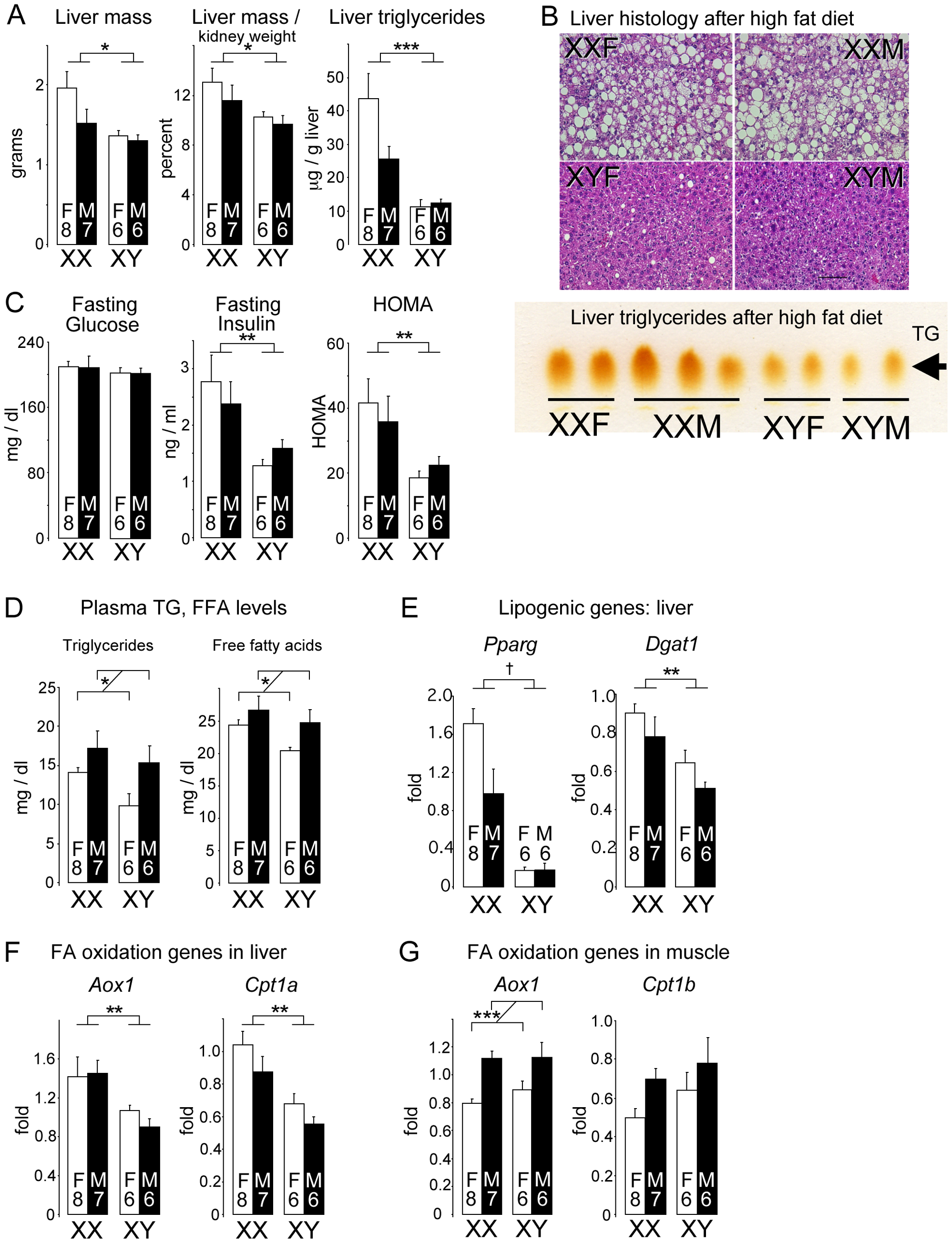 Diet-induced fatty liver and impaired glucose homeostasis are more pronounced in XX than XY mice.
