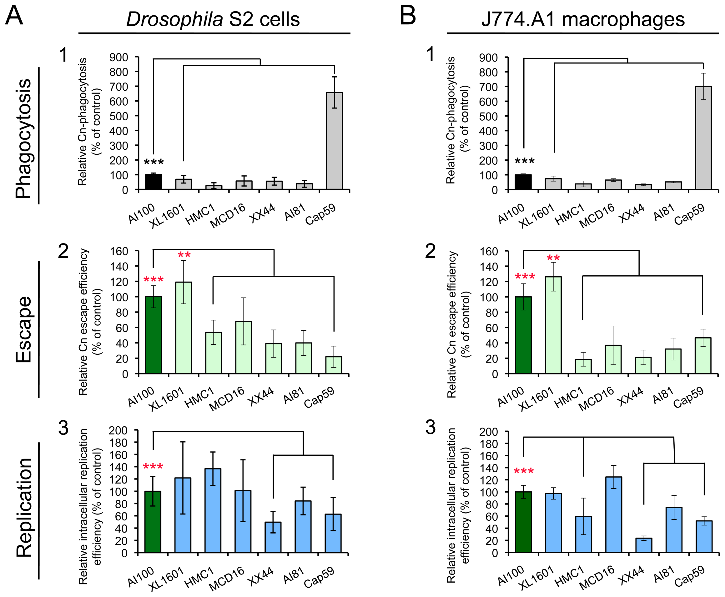 <i>Cryptococcus neoformans</i> mutants behave similarly in <i>Drosophila</i> S2 cells.