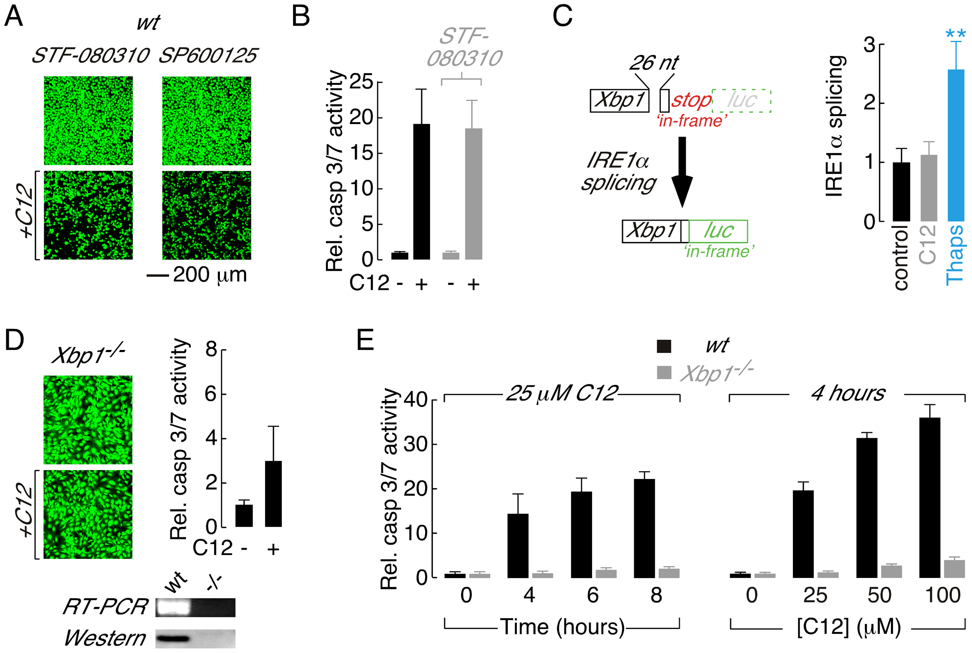 Absence of the XBP1s transcription factor is responsible for reduced C12 cytotoxicity.