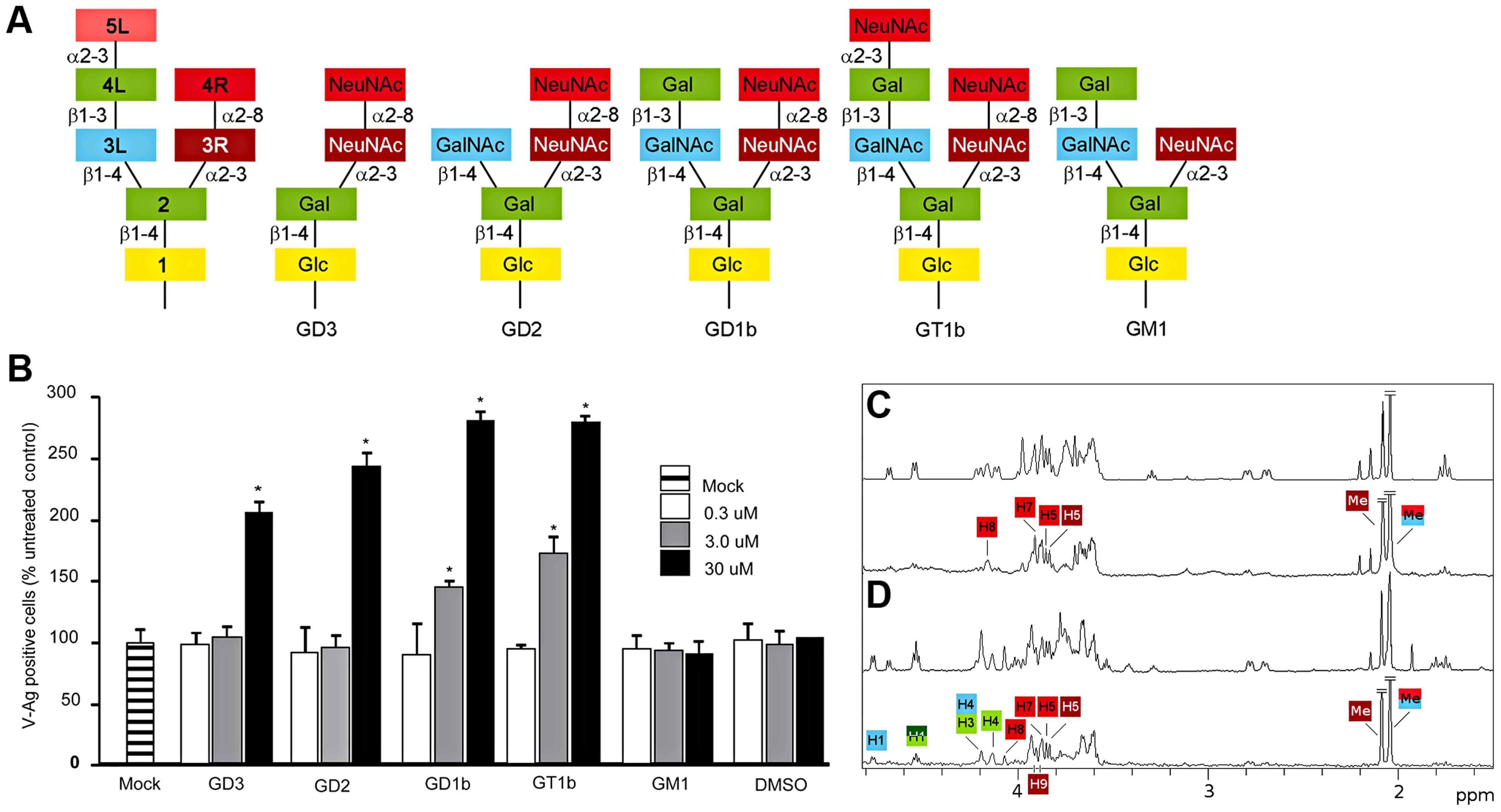 B-series gangliosides are receptors for BKPyV.