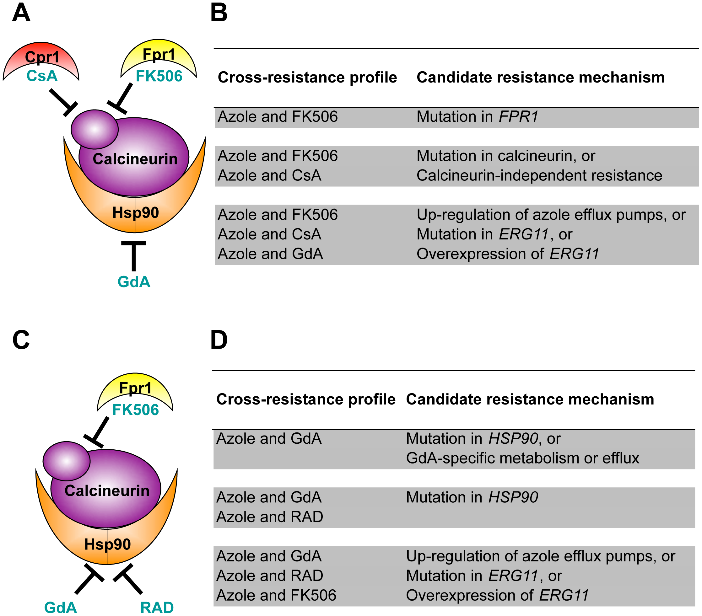 Cross-resistance profiles provide a strategy to predict resistance mechanisms.