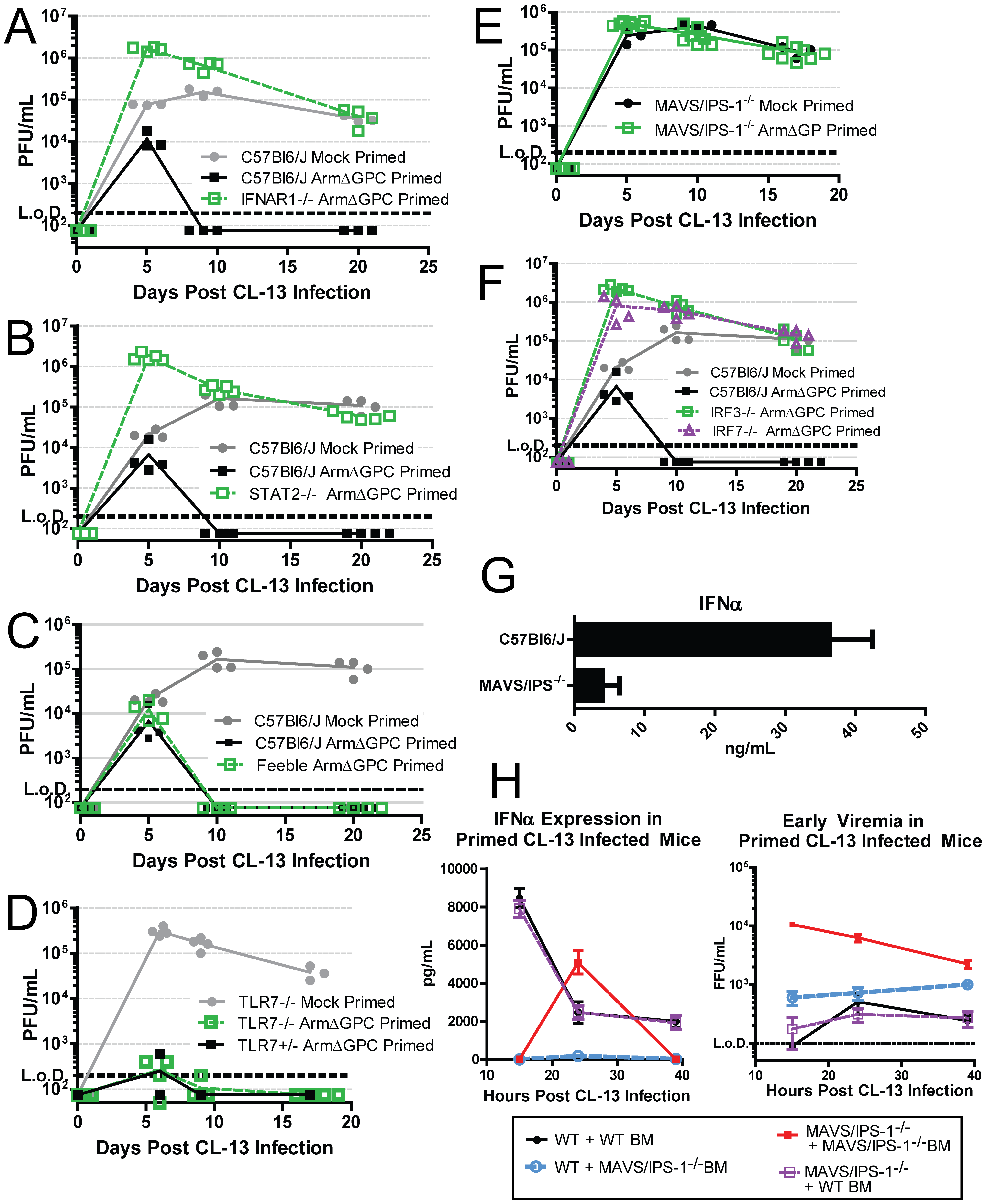 The role of IFN-I during a primed Cl13 infection.