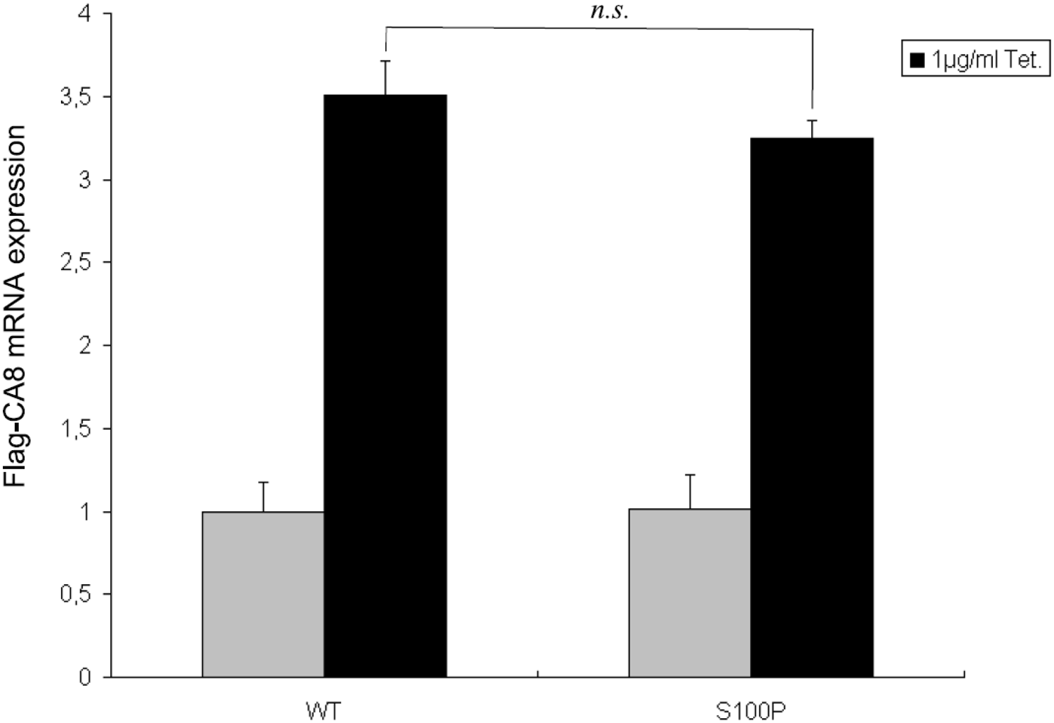 Relative expression levels of Flag-CA8 WT and S100P, tetracycline-inducible Flip-In T-REx-293 cells were grown in the absence or presence of 1 µg/ml tetracycline for 24 hours.