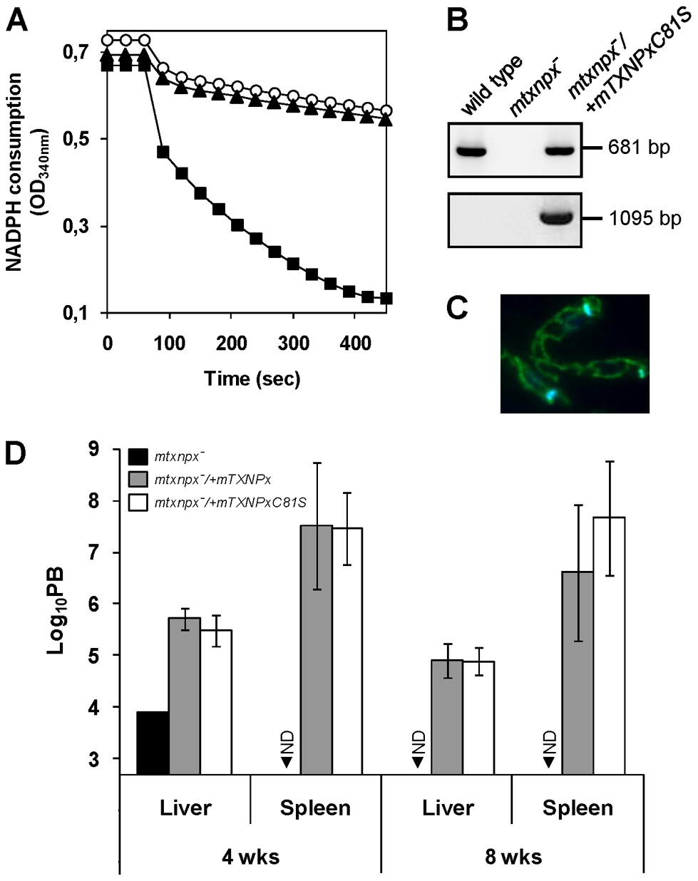 The peroxidase activity of mTXNPx is not a critical determinant of <i>L. infantum</i> virulence.