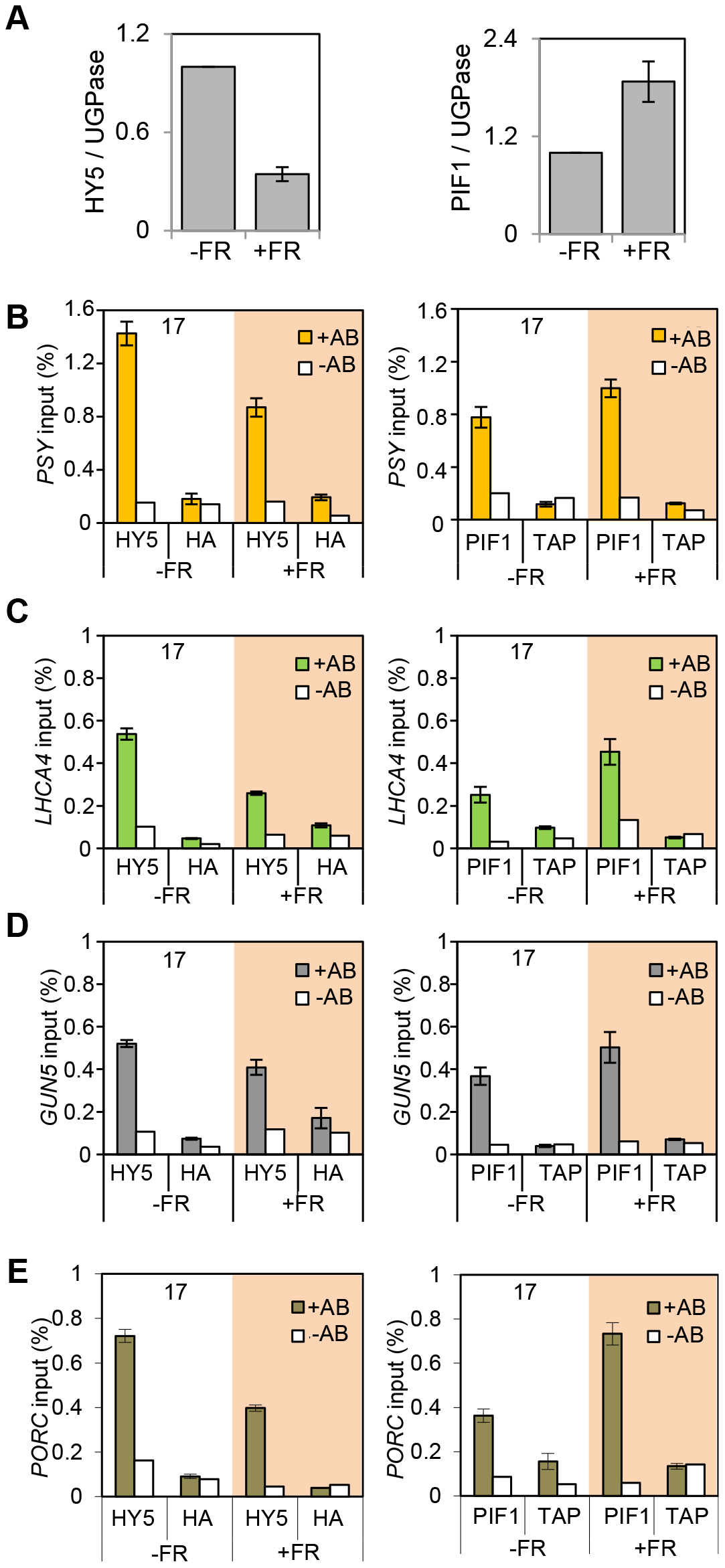 End of Day FR (EOD-FR) effect over 35S::HA-HY5 and 35S::TAP-PIF1 binding to G-box regions in the promoters of genes related to carotenoids and chlorophyll accumulation at 17°C.