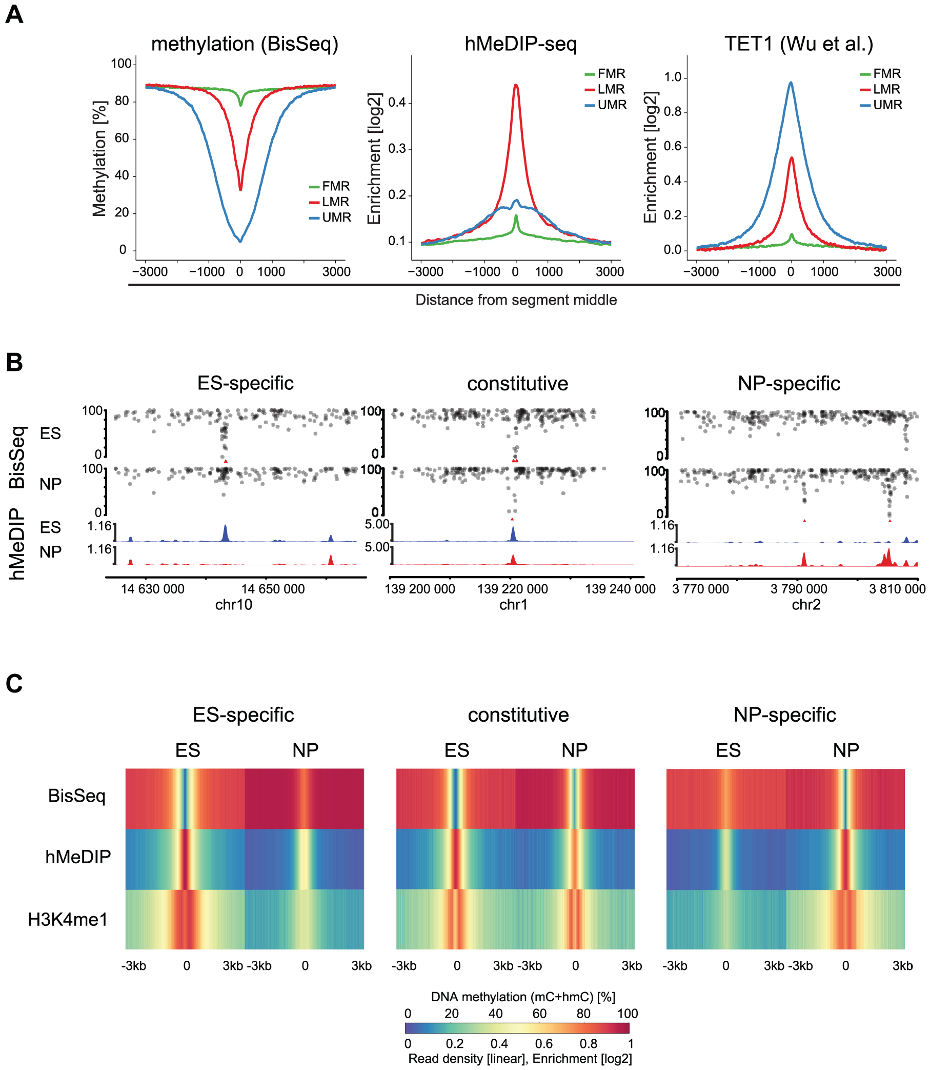 5hmC marks LMRs in a cell-type specific fashion.