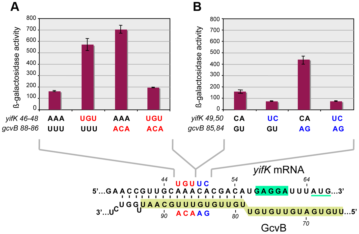 Differential effects of target sequence mutations on <i>yifK-lacZ</i> expression and on the response to compensatory changes in GcvB.