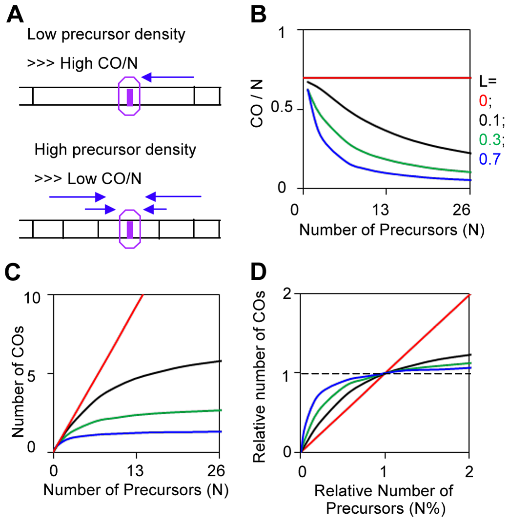 CO homeostasis and quantification by BF simulations.
