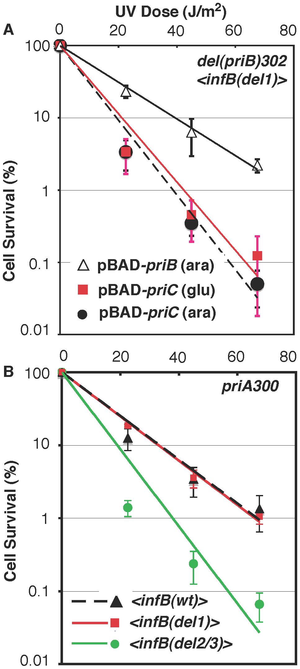 Epistasis analysis of <i>infB</i> alleles with <i>del(priB)302</i> and <i>priA300</i>.