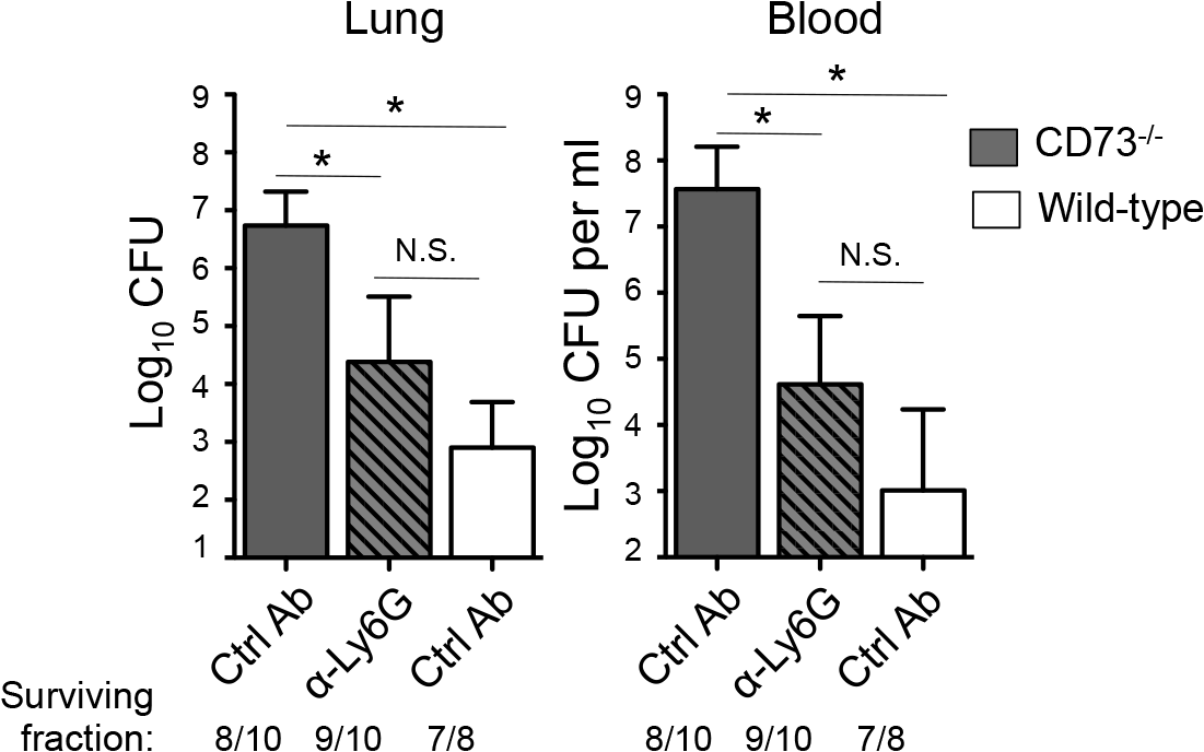 Post-infection depletion of PMNs partially reverses the susceptibility of <i>CD73</i><sup><i>-/-</i></sup> mice to pneumococcal challenge.