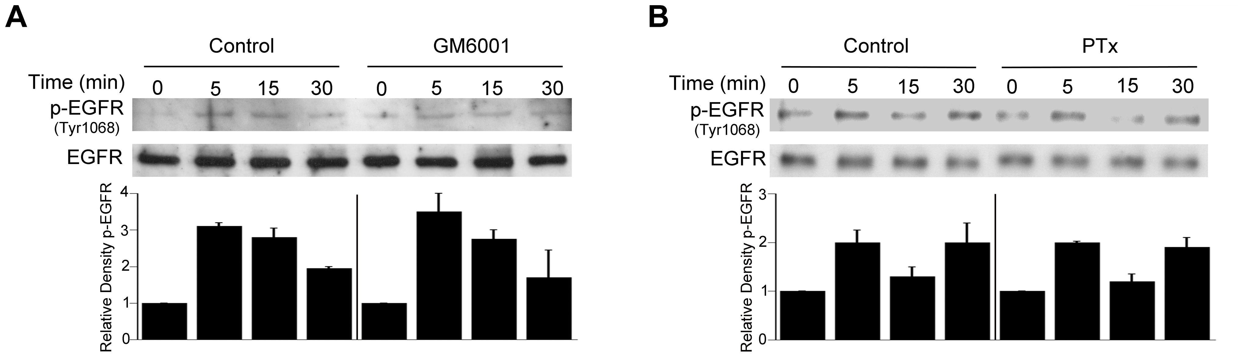 Role of metalloproteinases and G protein coupled receptors in <i>T. gondii</i>-induced EGFR phosphorylation.