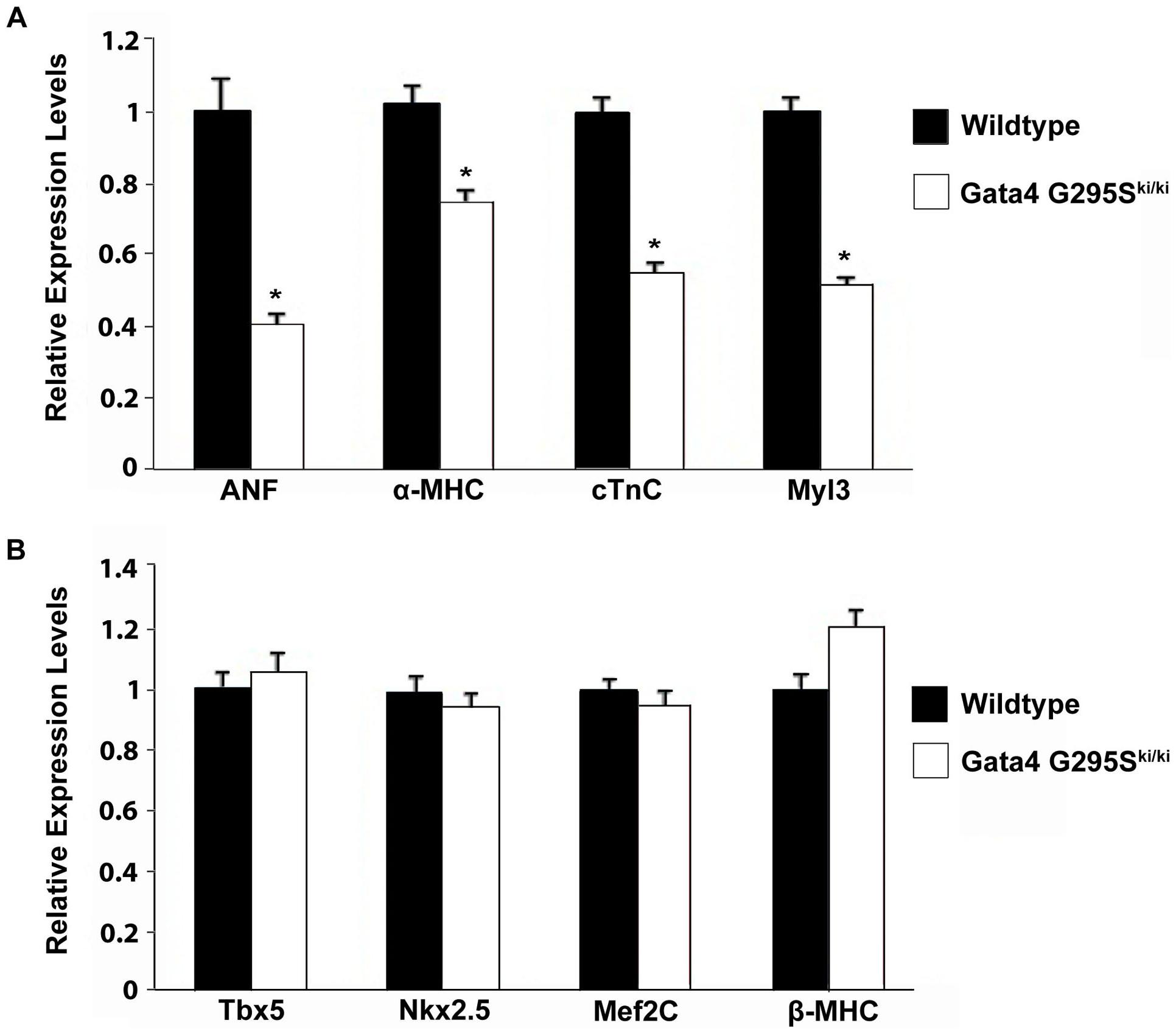 Decreased expression of Gata4 target genes in <i>Gata4 G295S<sup>ki/ki</sup></i> embryonic hearts.