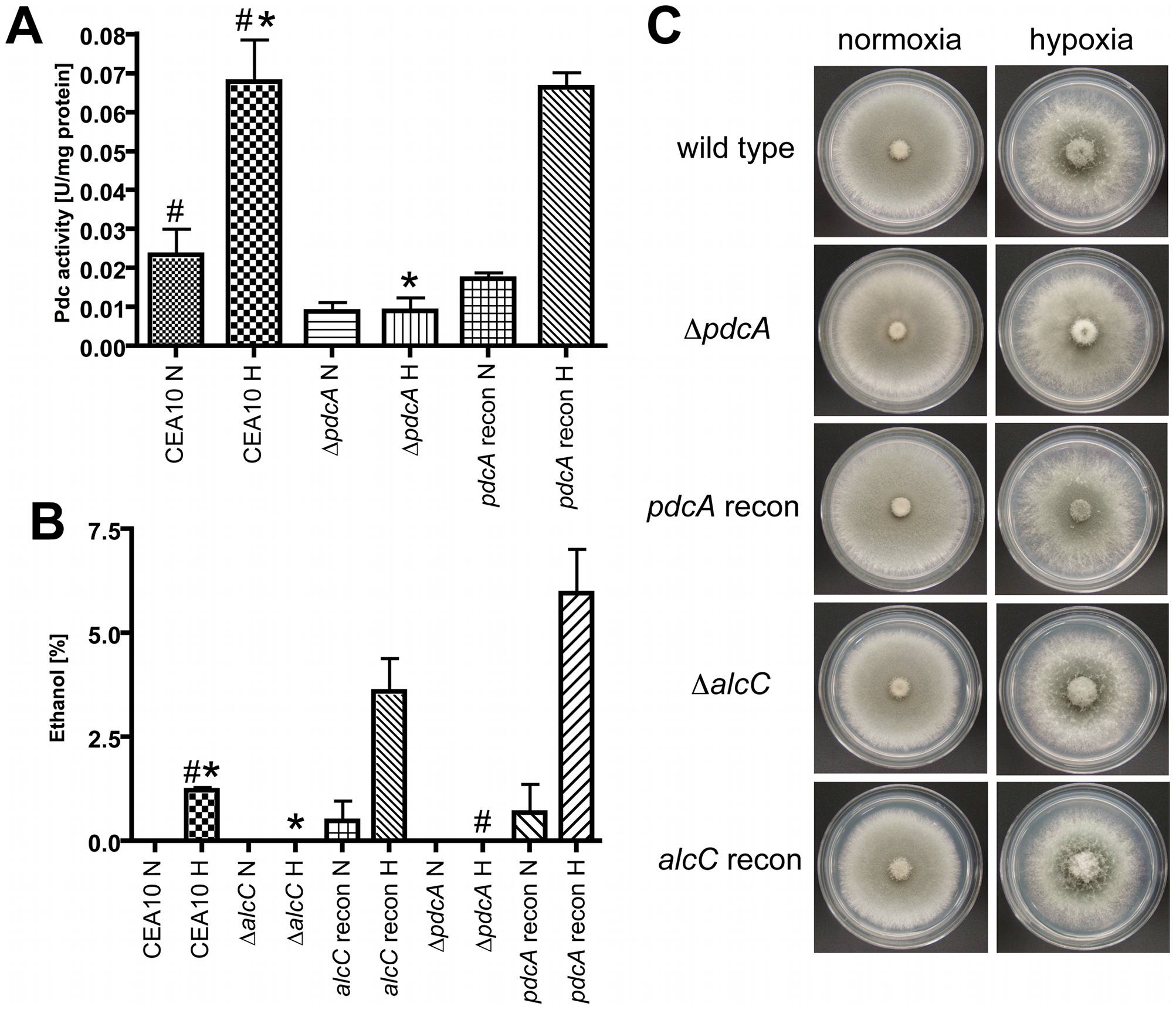 PdcA and AlcC are required for <i>in vitro</i> ethanol fermentation but not hypoxic growth of <i>A. fumigatus</i>.