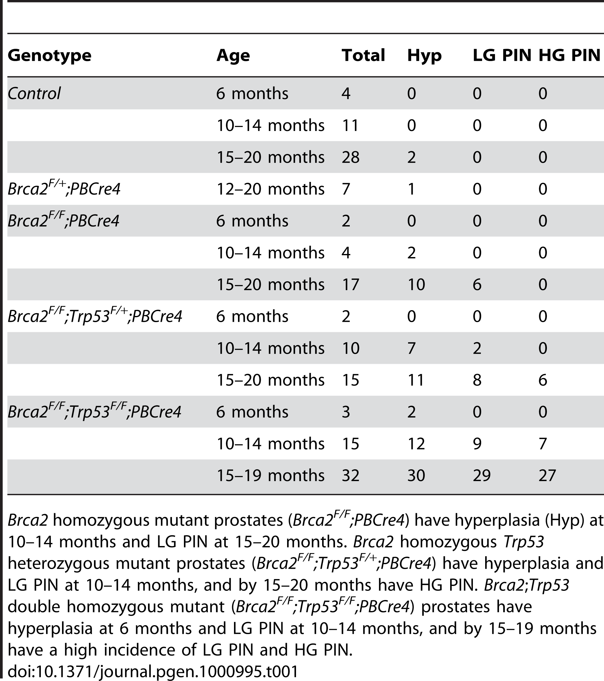 The number of control, <i>Brca2</i> mutant and <i>Brca2</i>;<i>Trp53</i> mutant prostates analysed and their phenotype.