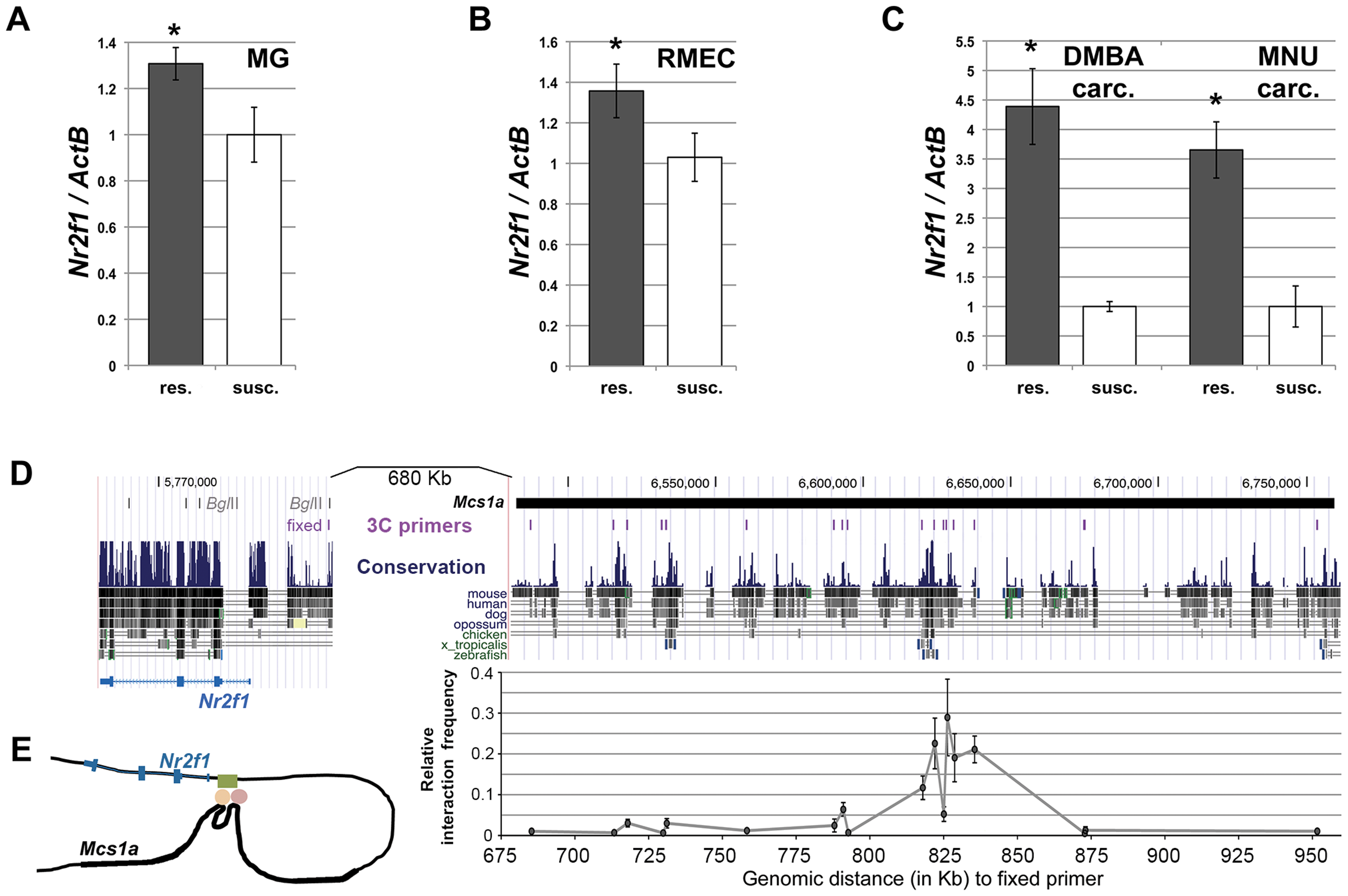 The non-protein coding <i>Mcs1a</i> resistance locus regulates transcript levels of <i>Nr2f1</i> in the mammary gland, mammary epithelium and mammary carcinomas.