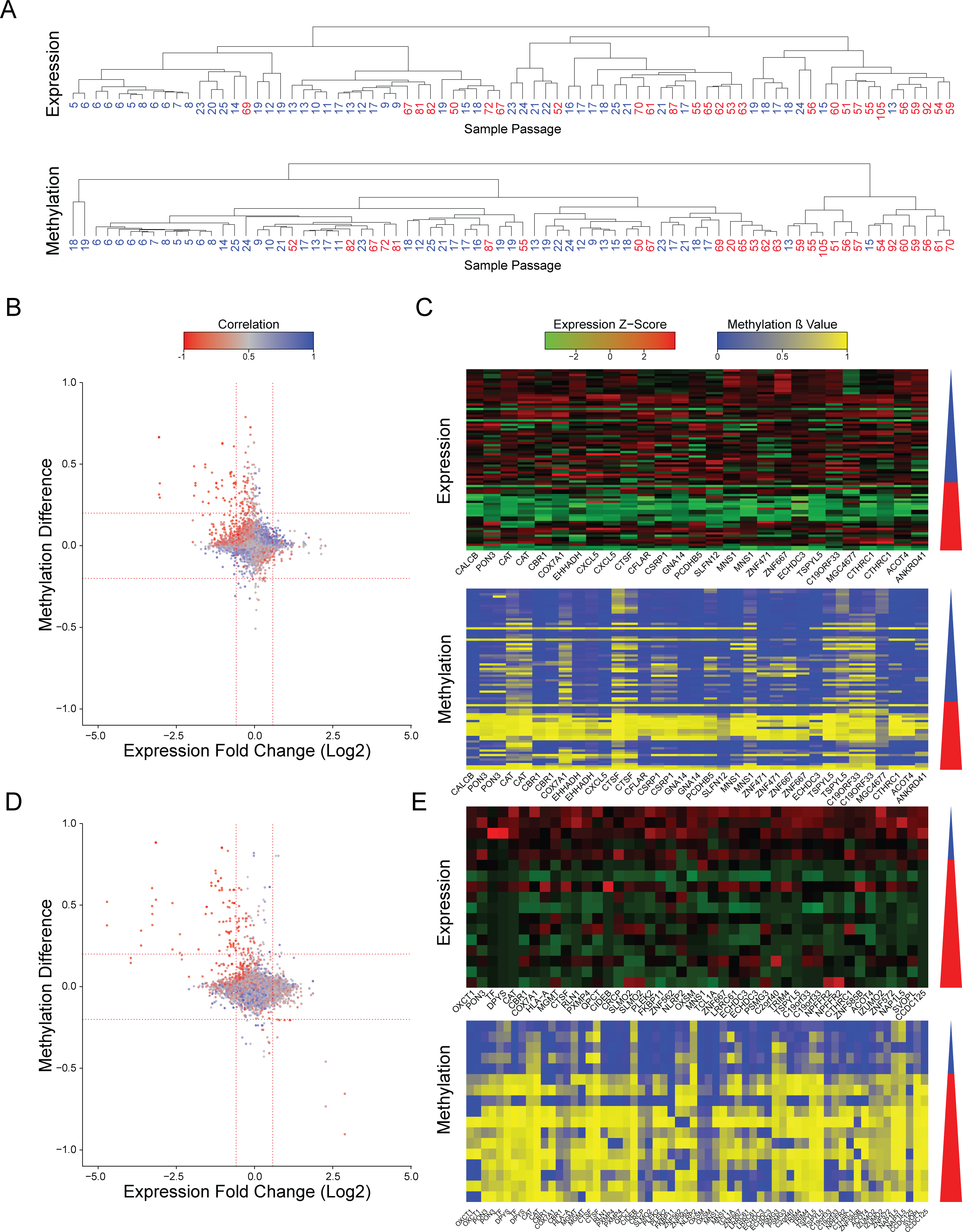 Changes in expression and methylation during prolonged culturing of hPSCs.