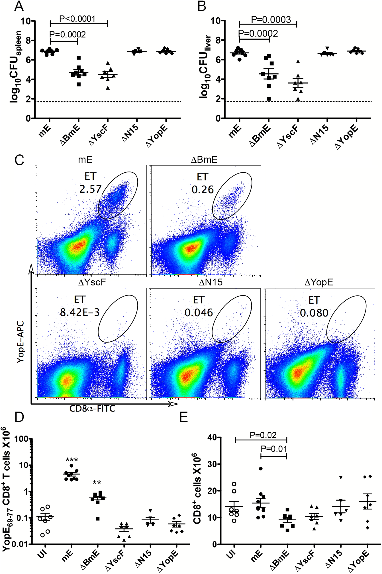 Translocation-dependent and-independent production of ET cells.