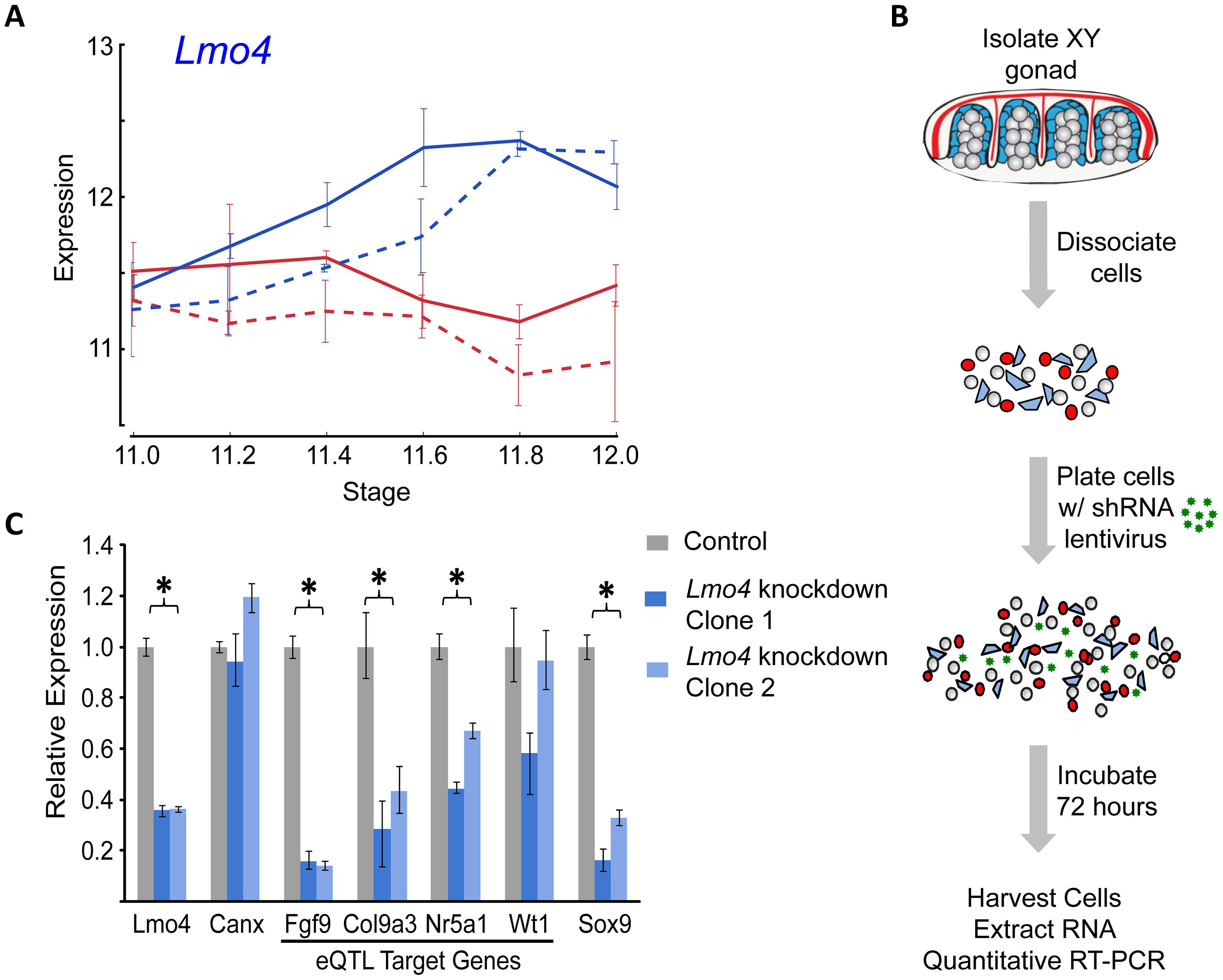 Validation of <i>Lmo4</i> as a novel regulator of gene expression in the fetal gonad.