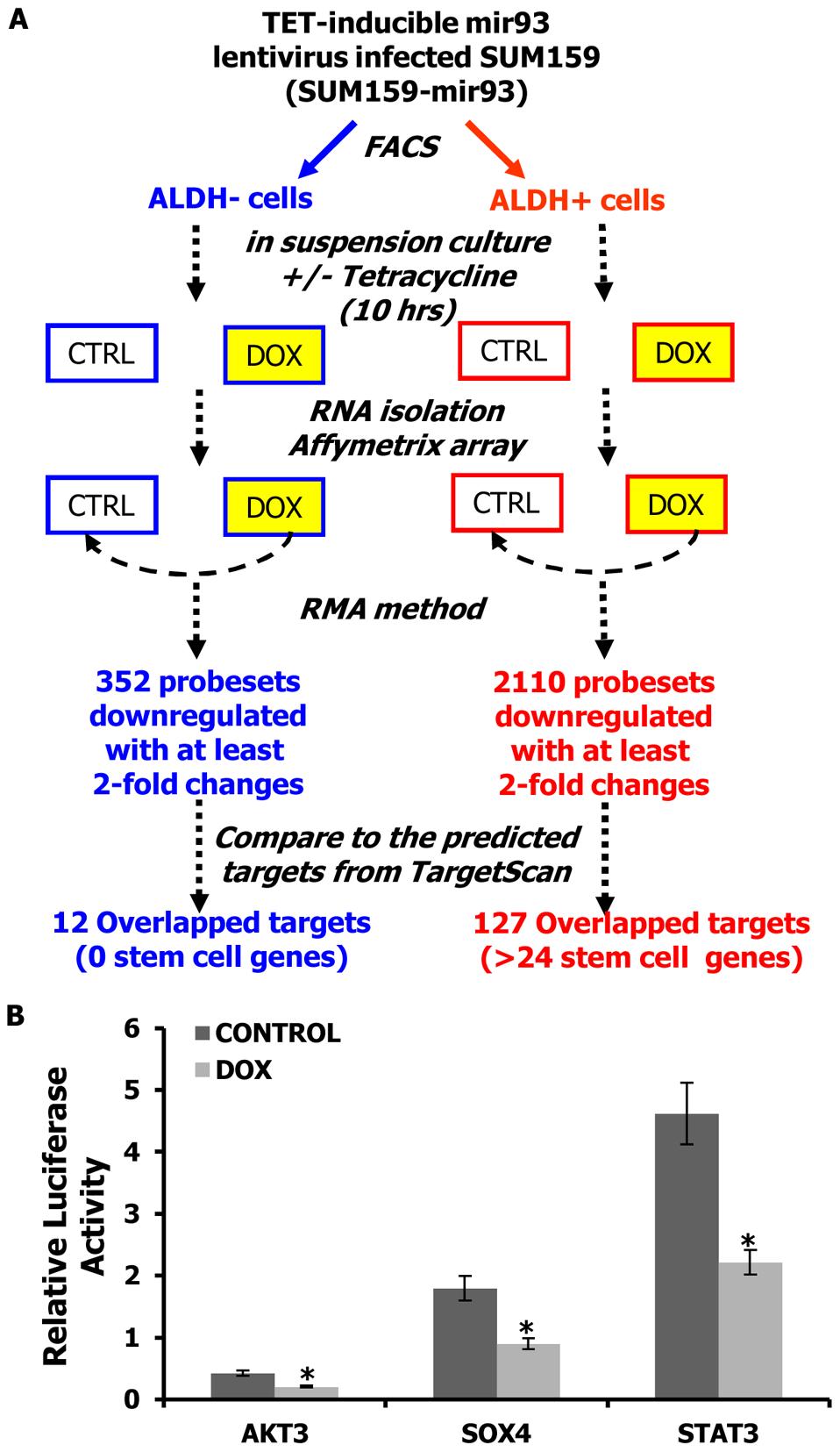 mir-93 targets stem cell regulatory genes.