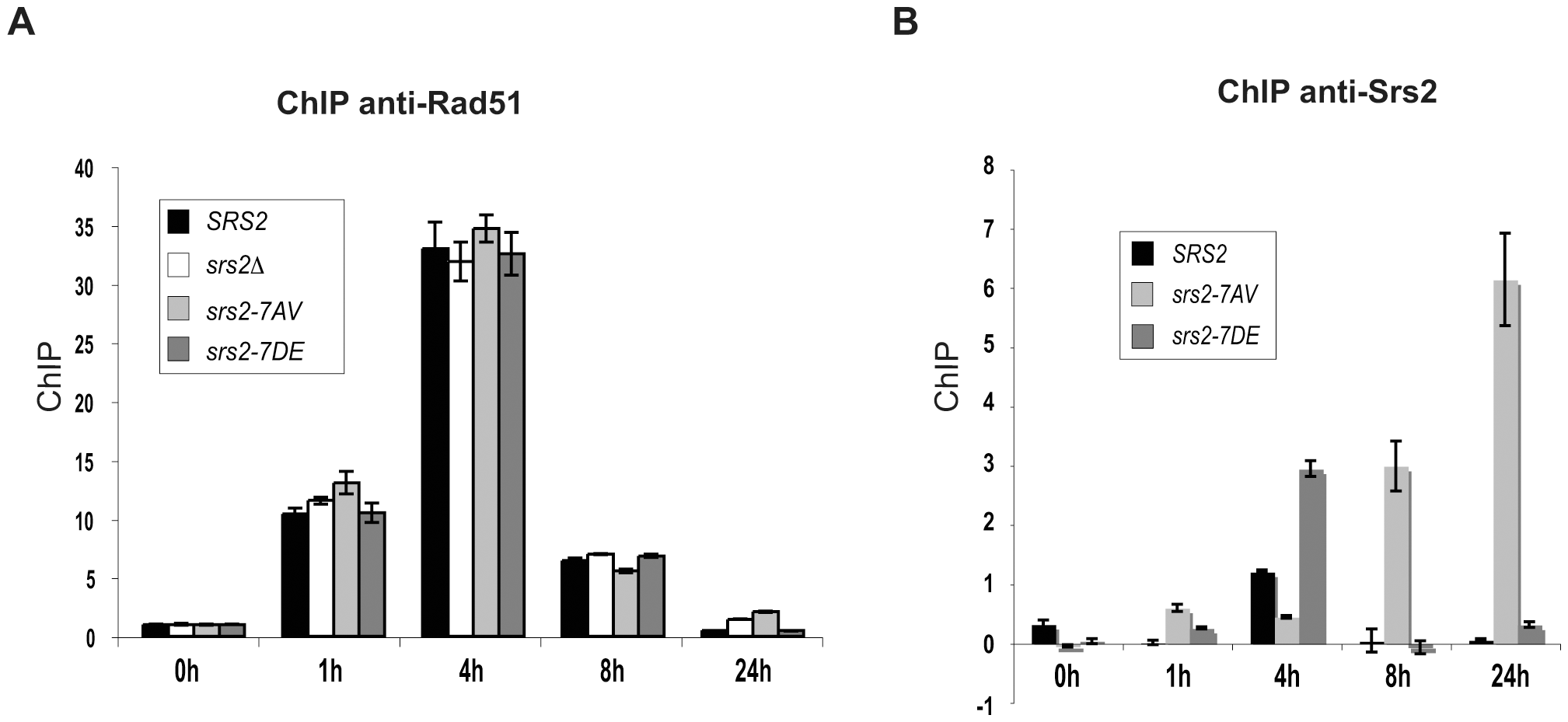 Srs2 phosphorylation controls turnover of Srs2 but not Rad51 at the invading strand during DSB repair.