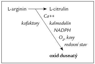 NO je syntetizován ze semiesenciální aminokyseliny L-argininu pomocí tří izoforem NOS za přítomnosti různých kofaktorů [48].