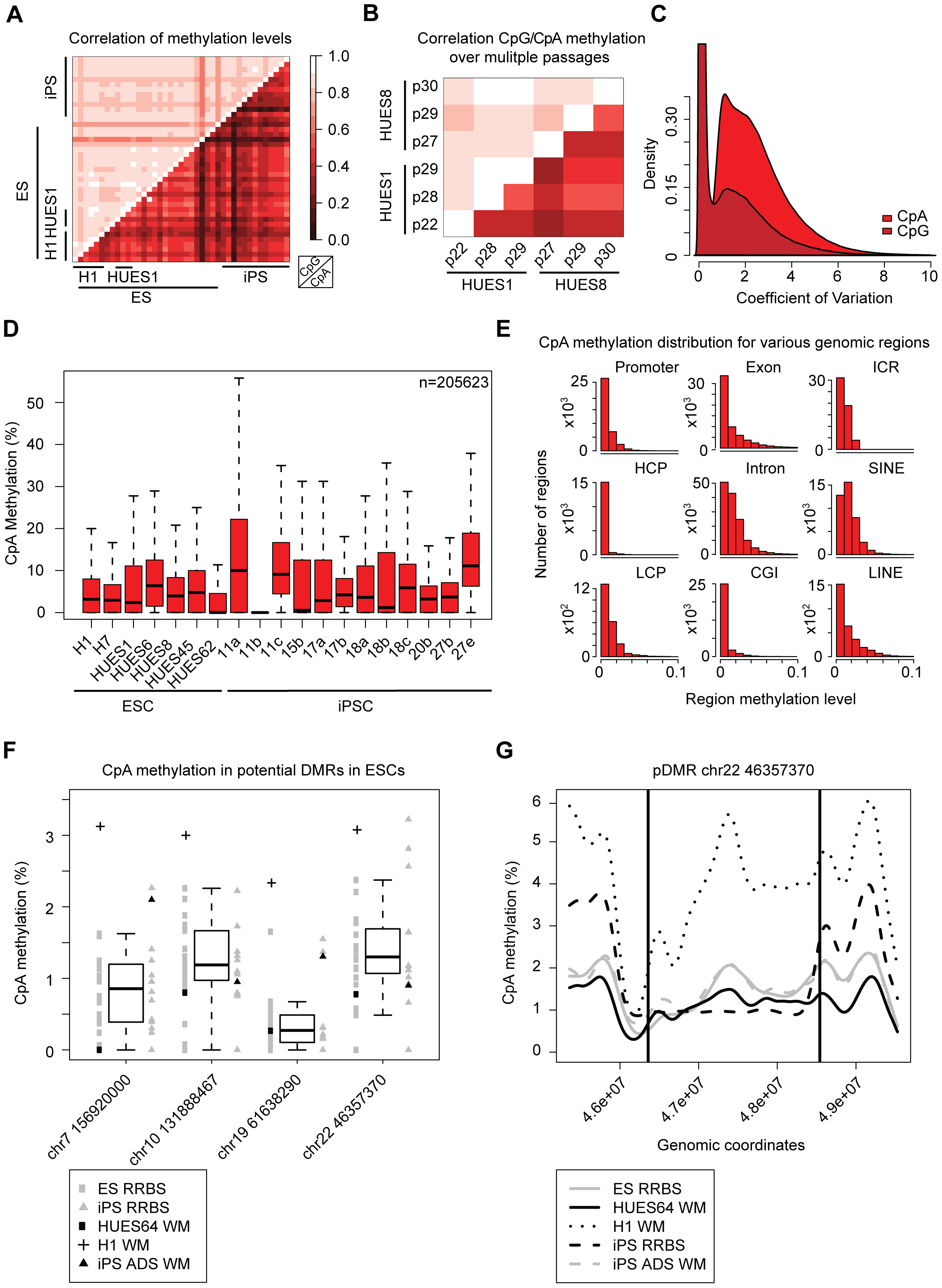 CpA methylation shows little conservation over several passages.