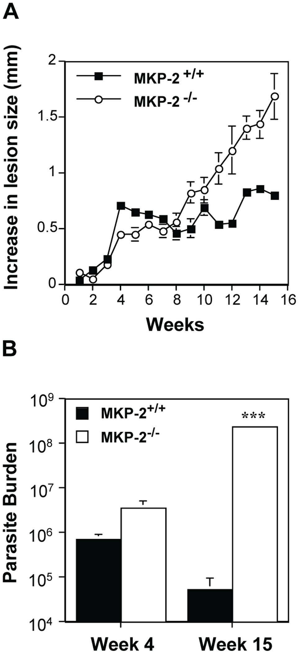 MKP-2 deficiency increases susceptibility to <i>L. mexicana</i> infection in the footpad.