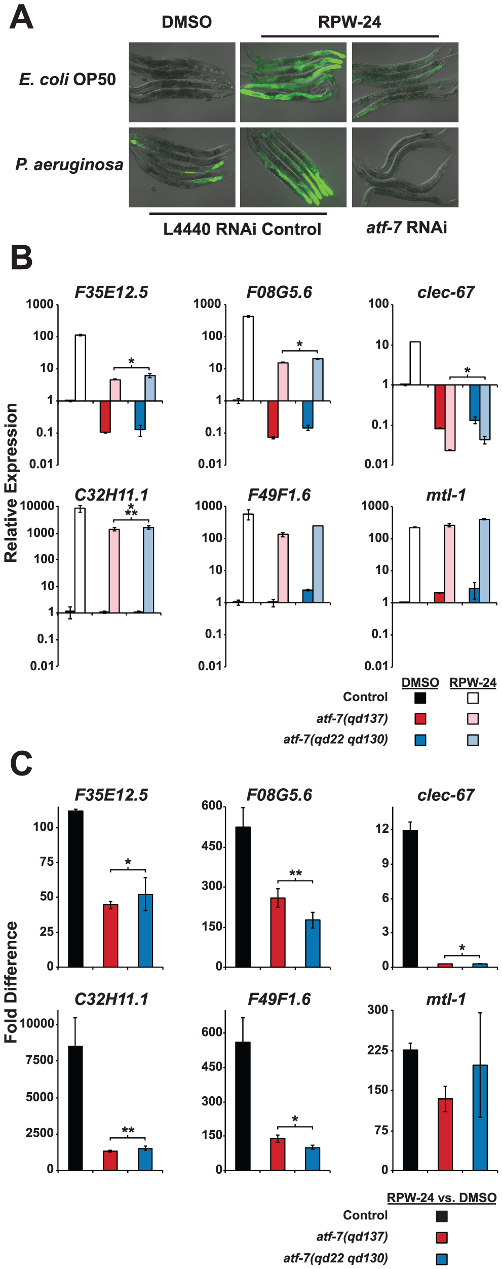 The <i>C. elegans</i> transcription factor ATF-7 regulates immune gene induction by RPW-24.