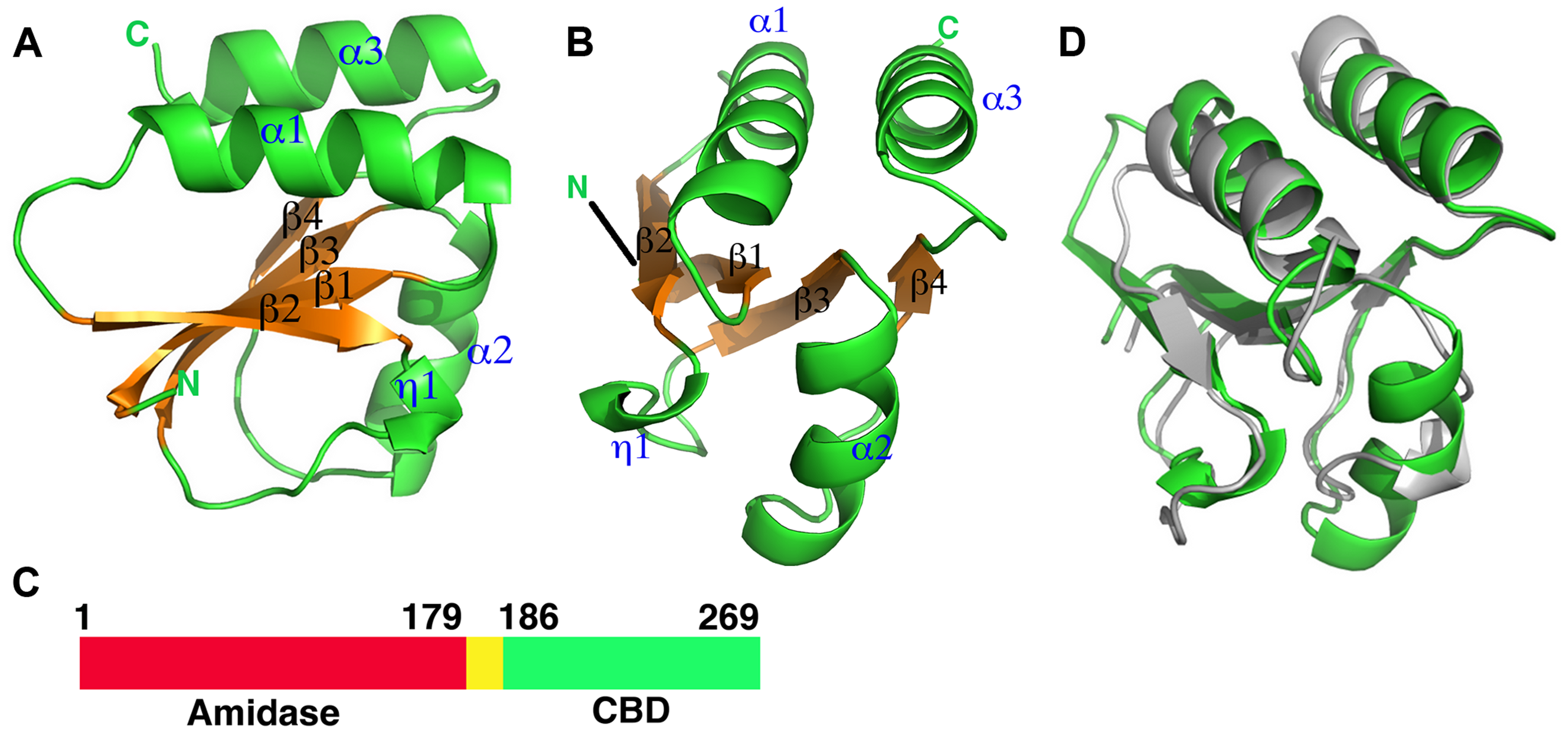 Overall structures of the proteolytic fragments of the CD27L and CTP1L endolysins reveal a novel fold for the C-terminal domain.