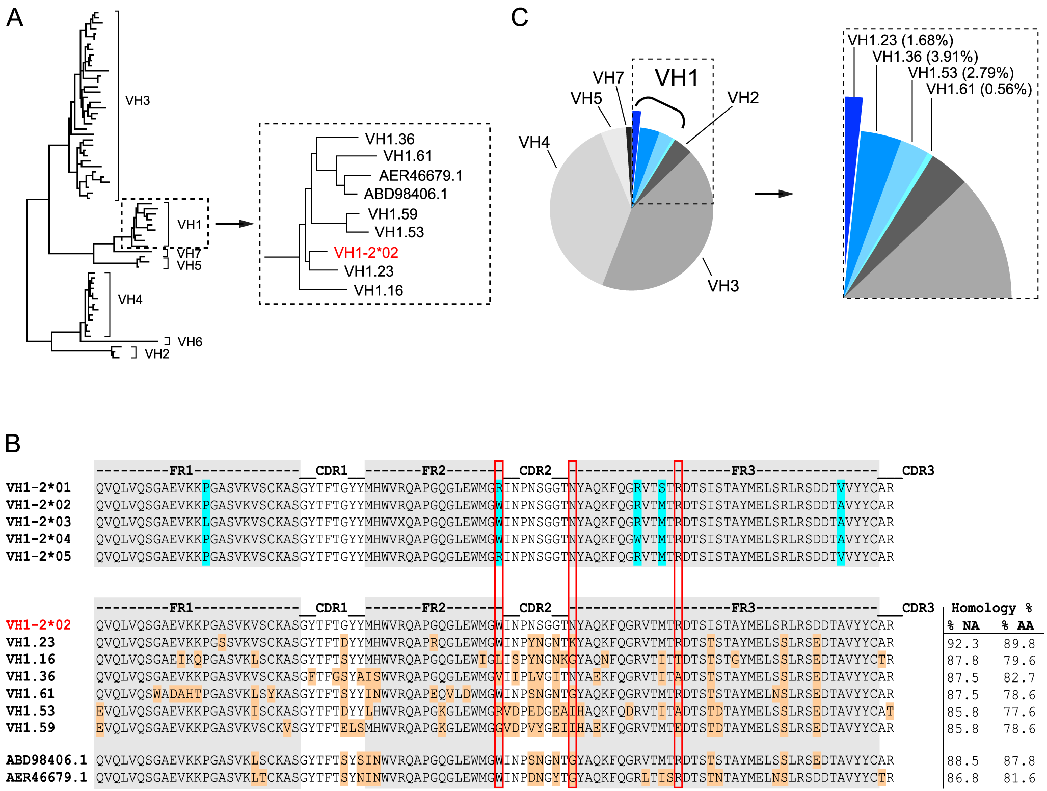 NHP VH1 gene segment usage.