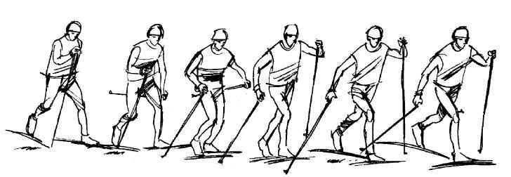 Průběh pohybu na lyžích při střídavém dvoudobém běhu klasickou technikou.