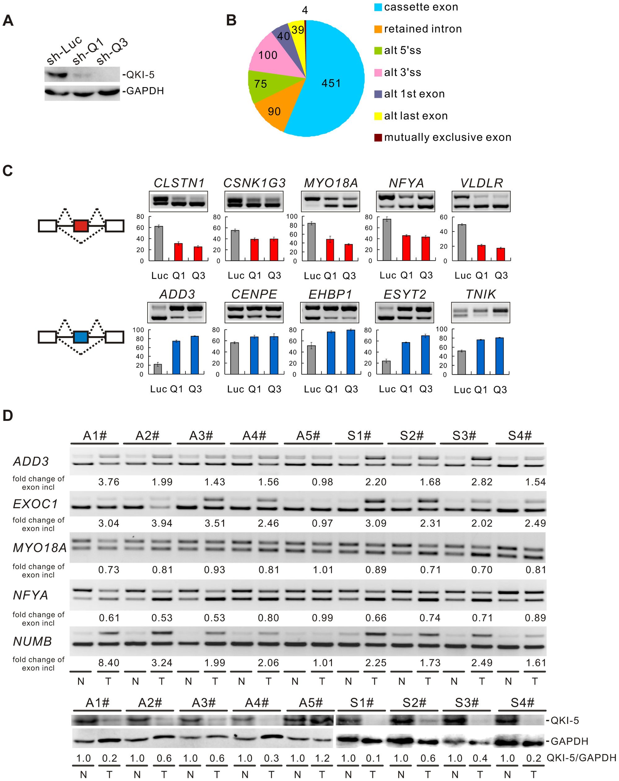 QKI regulates cancer-associated splicing changes.