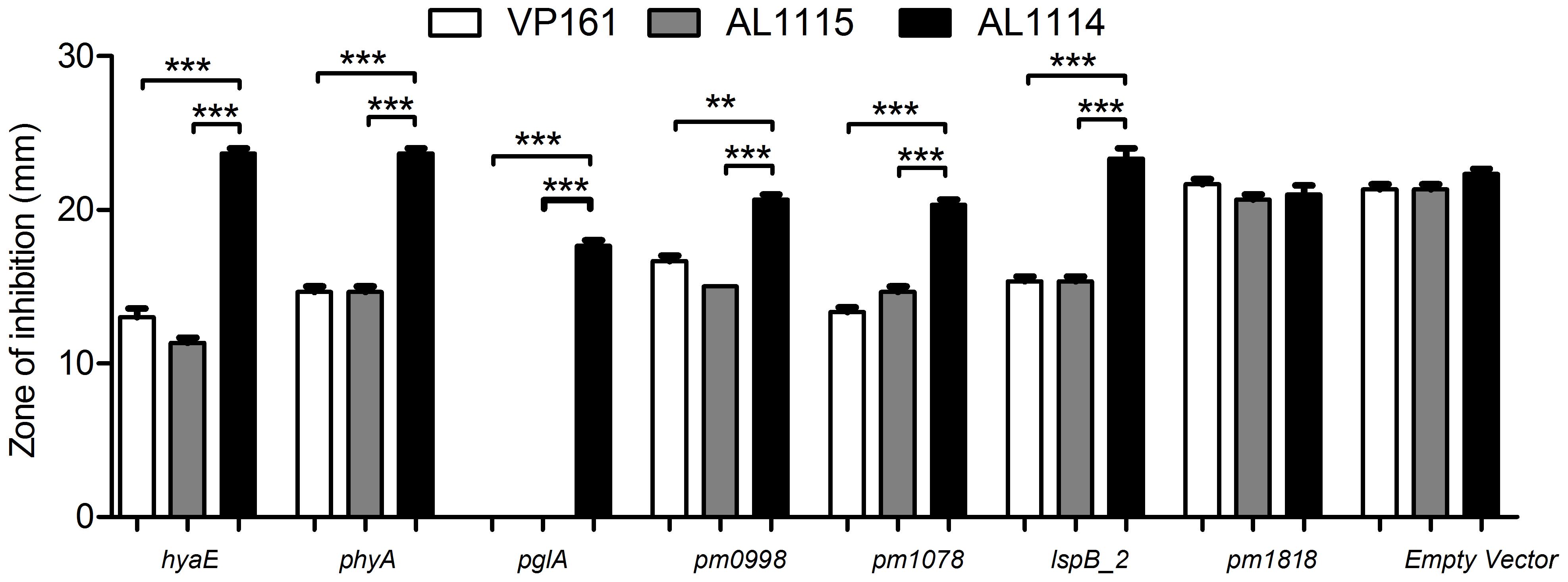 Sensitivity of <i>P. multocida</i> strains to kanamycin as determined by disc diffusion assays.