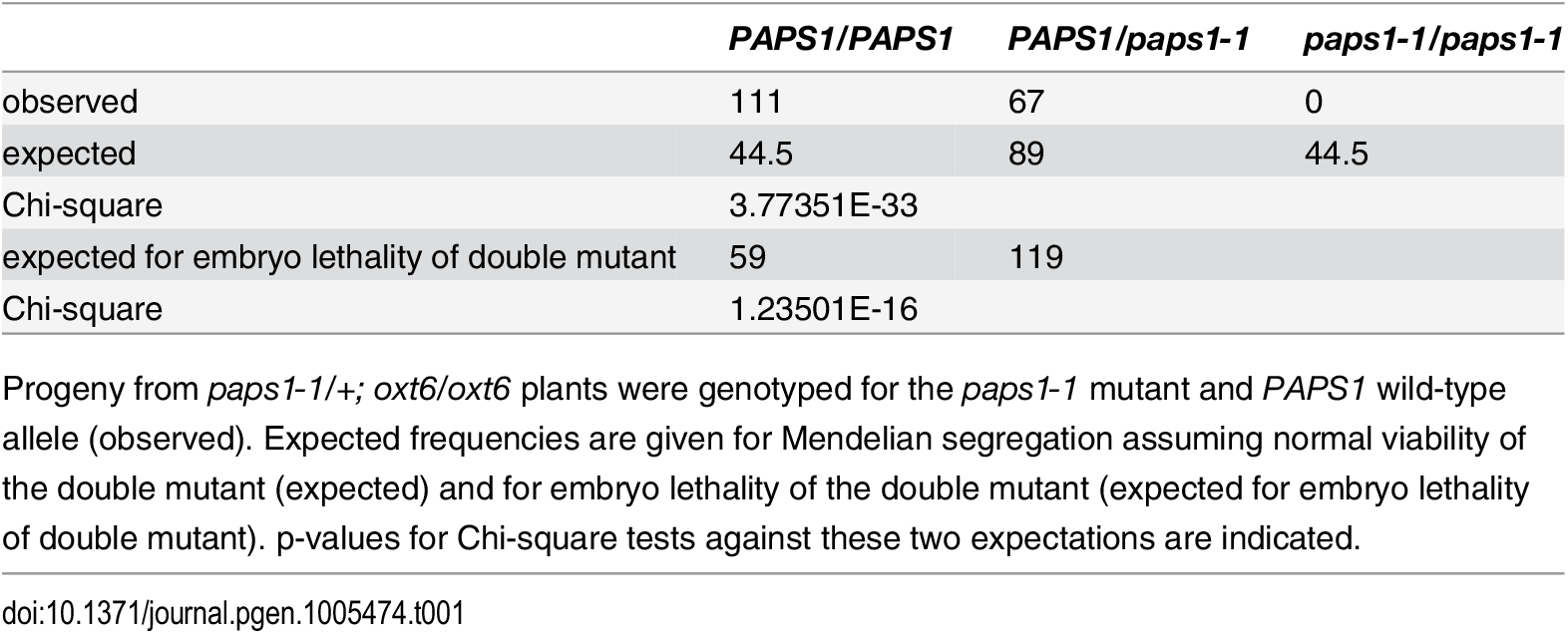 Distribution of <i>PAPS1</i> genotypes in the progeny of <i>paps1-1/+</i>; <i>oxt6/oxt6</i> plants.