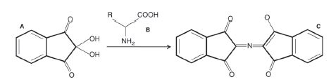 Fig. 1: Overall scheme of derivatization reaction between (A) ninhydrin and (B) amino acid, resulting in (C) Ruhemann´s purple.