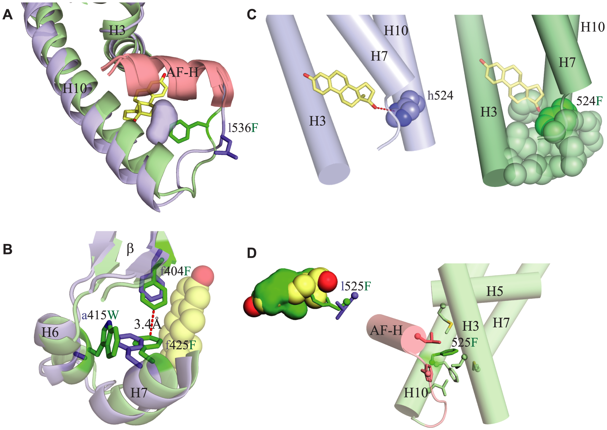 Structural mechanisms by which key mutations contribute to constitutive activity.