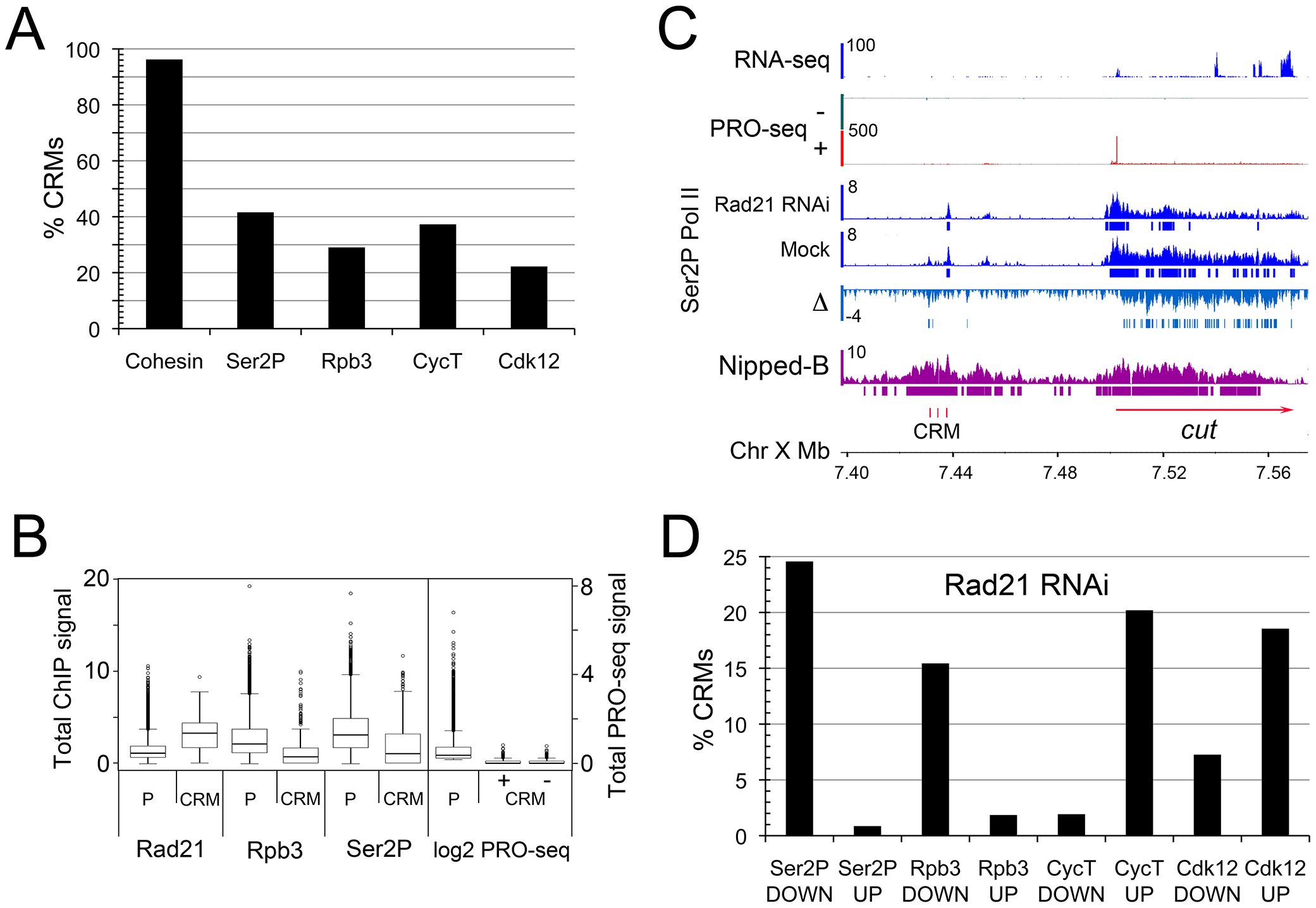 Cohesin binds nearly all predicted extragenic cis-regulatory modules (CRMs) in BG3 cells.