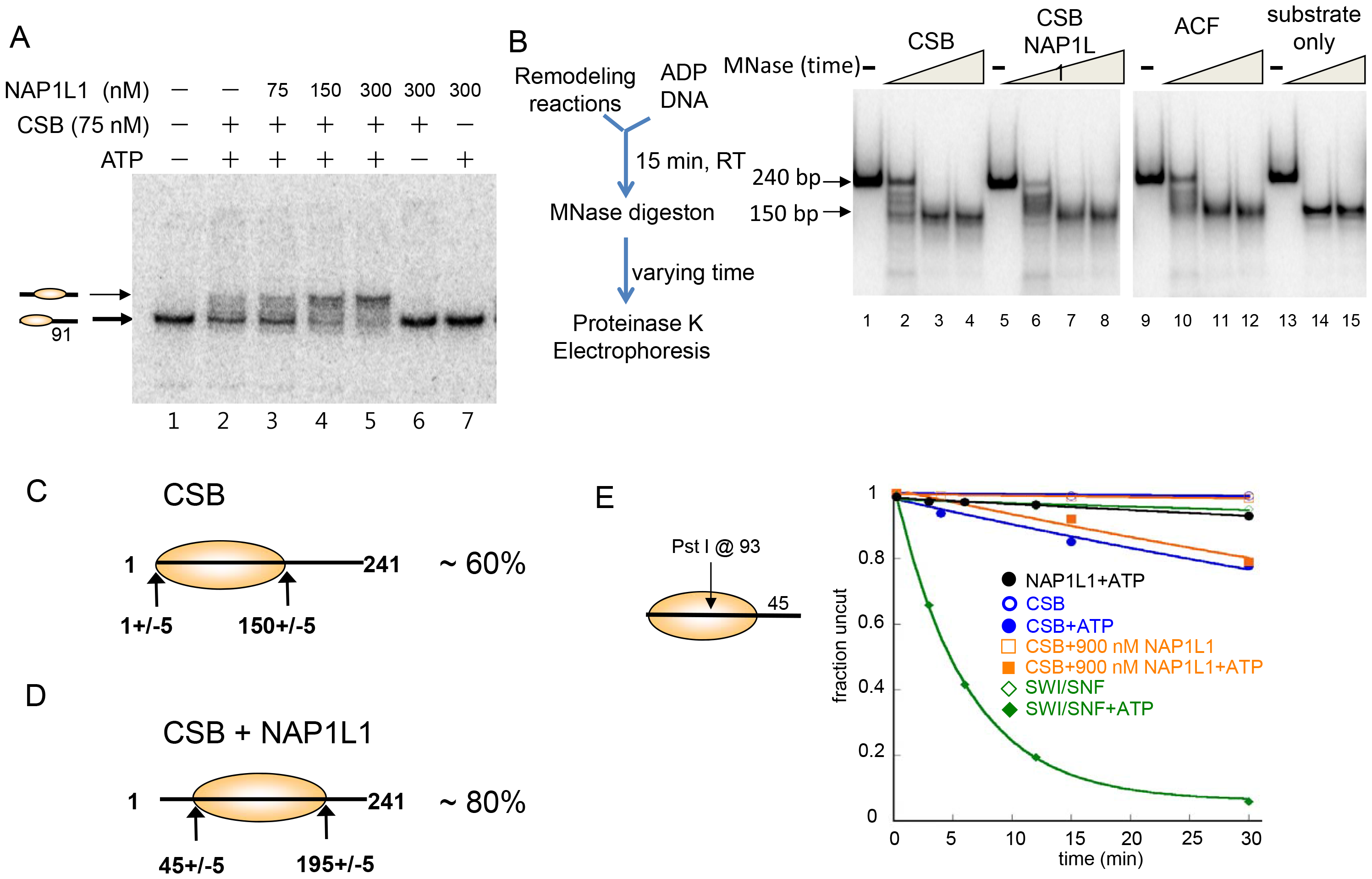 CSB and NAP1-like Chaperones Efficiently Slide Nucleosomes to the Center of a DNA Fragment.