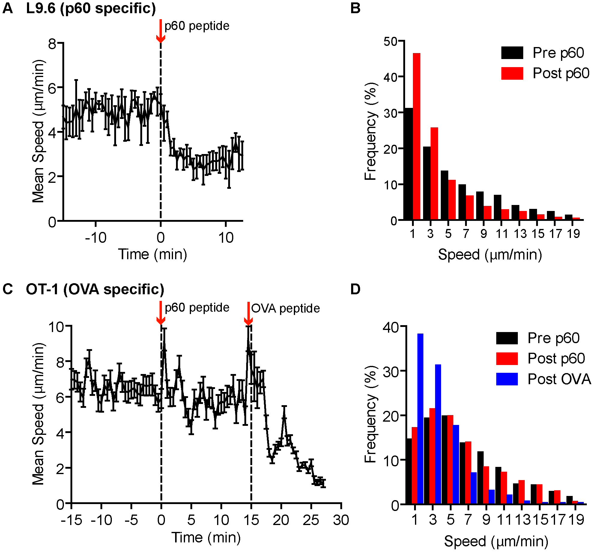 Systemic cognate peptide induces acute arrest of crawling CD8<sup>+</sup> T cells outside <i>Lm</i> foci.