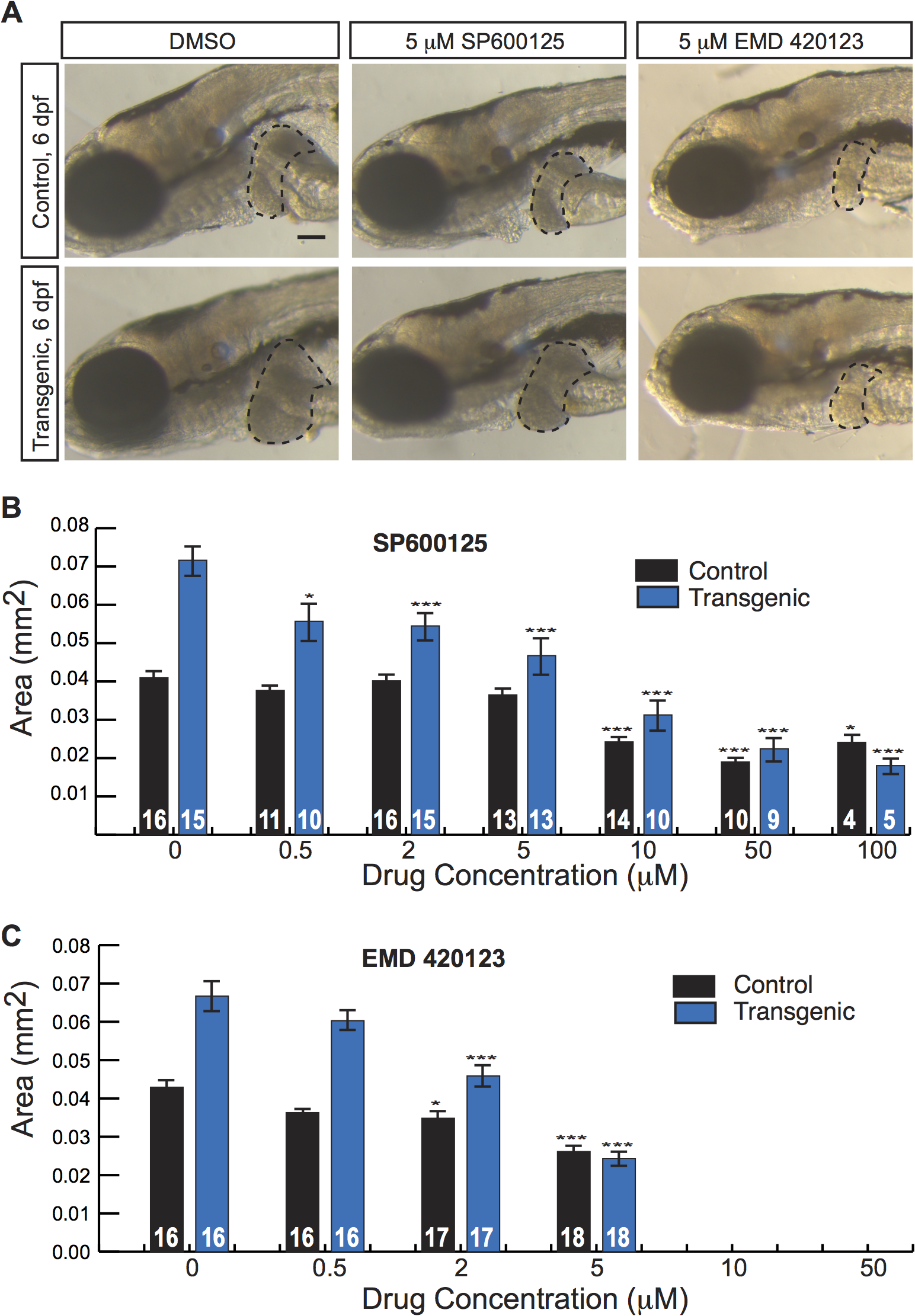 JNK inhibitors suppress larval liver enlargement caused by activated β-catenin.