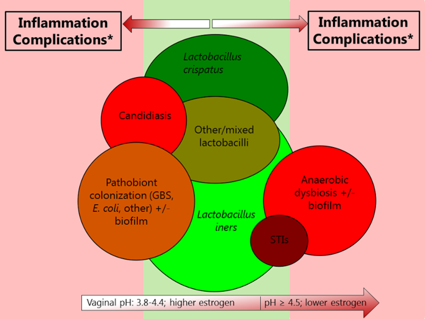 Visualization of interrelationships among various urogenital conditions involving micro-organisms.
