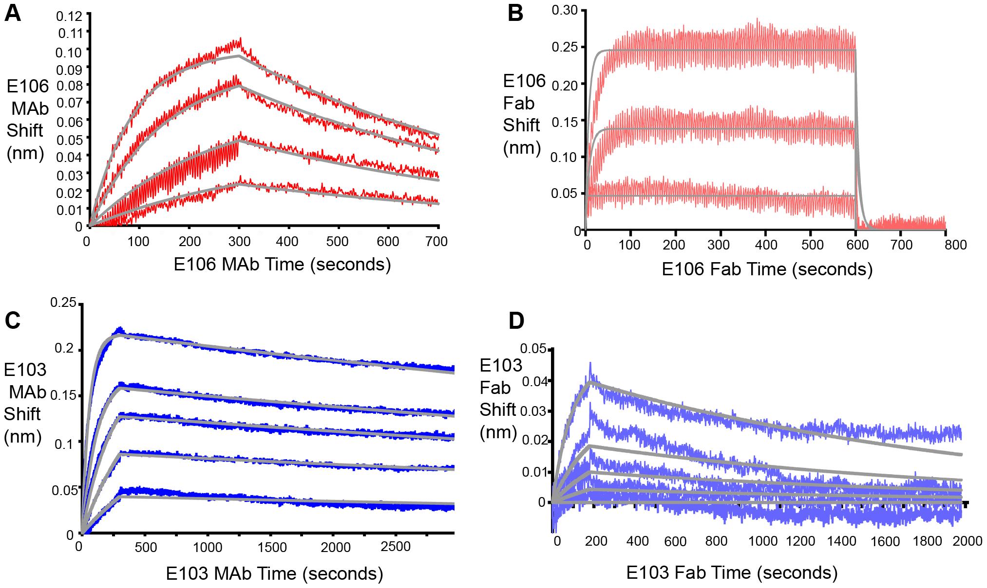 Fab and MAb binding to DENV-1 RVPs.