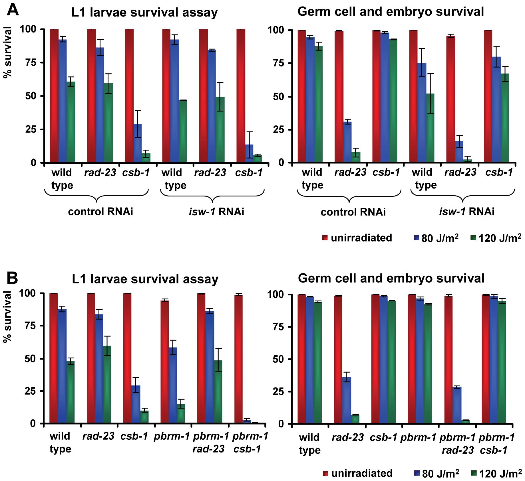 Genetic interactions of <i>isw-1</i> and <i>pbrm-1</i> with <i>rad-23</i> and <i>csb-1</i>.