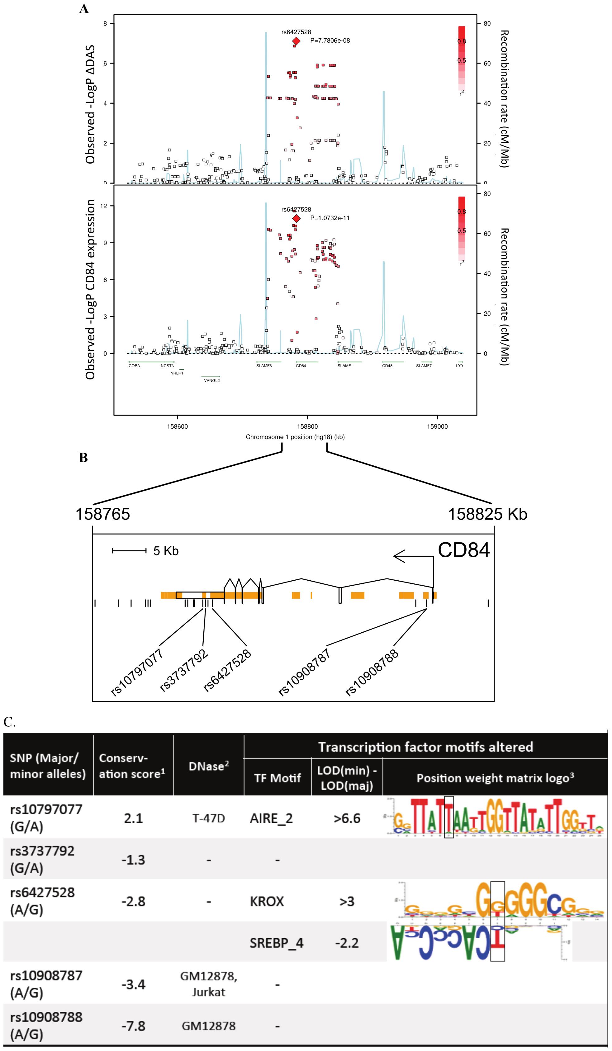 Association results and SNP annotations in the <i>1q23 CD84</i> locus.