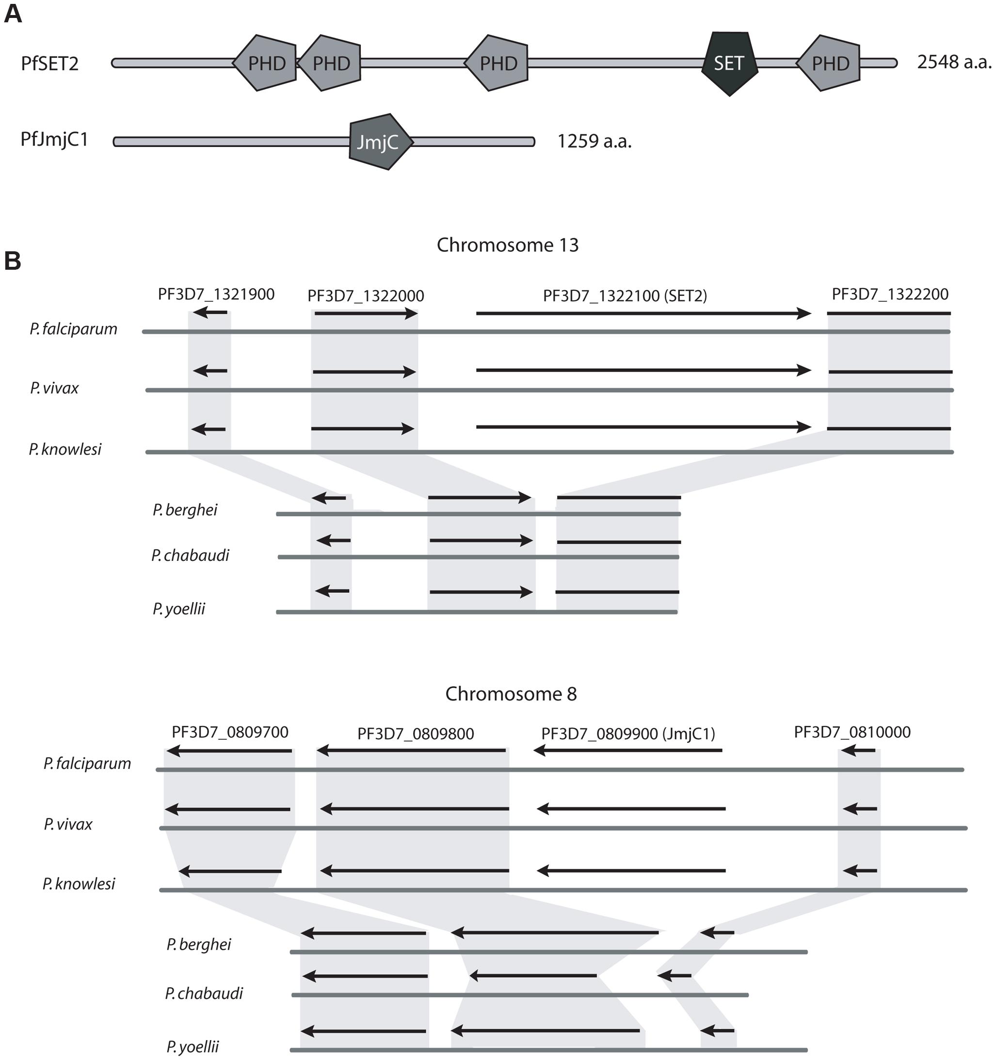 Two histone modifiers unique to primate parasites.