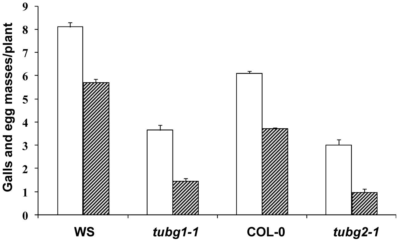 Nematode Infection Test of γ-Tubulin Mutants <i>tubg1-1</i> and <i>tubg2-1</i> Compared to Wild-Type WS or Col-0.